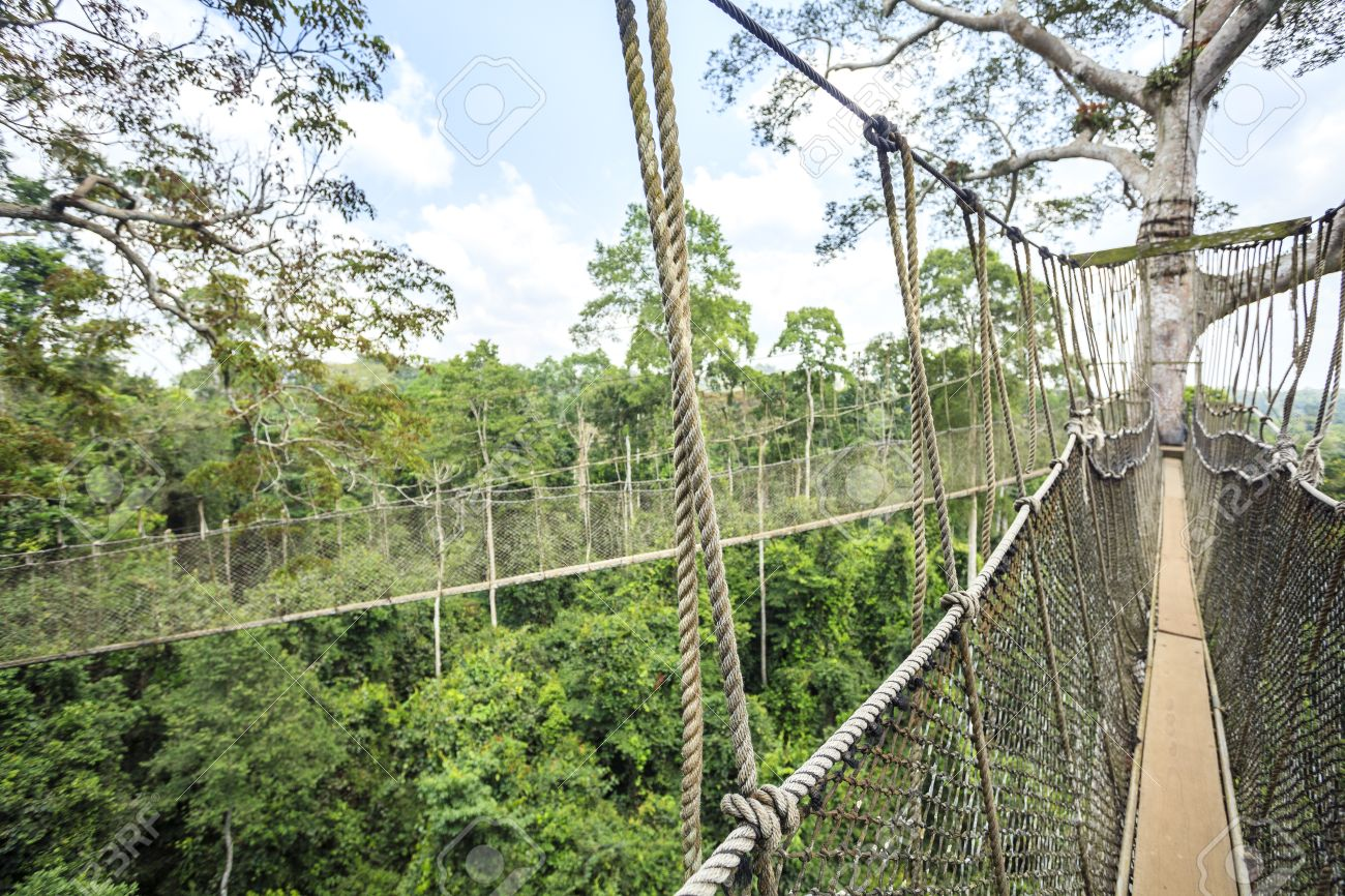 Canopy walkway in Kakum National Park Accra Region Ghana West Africa Stock Photo : canopy park - memphite.com