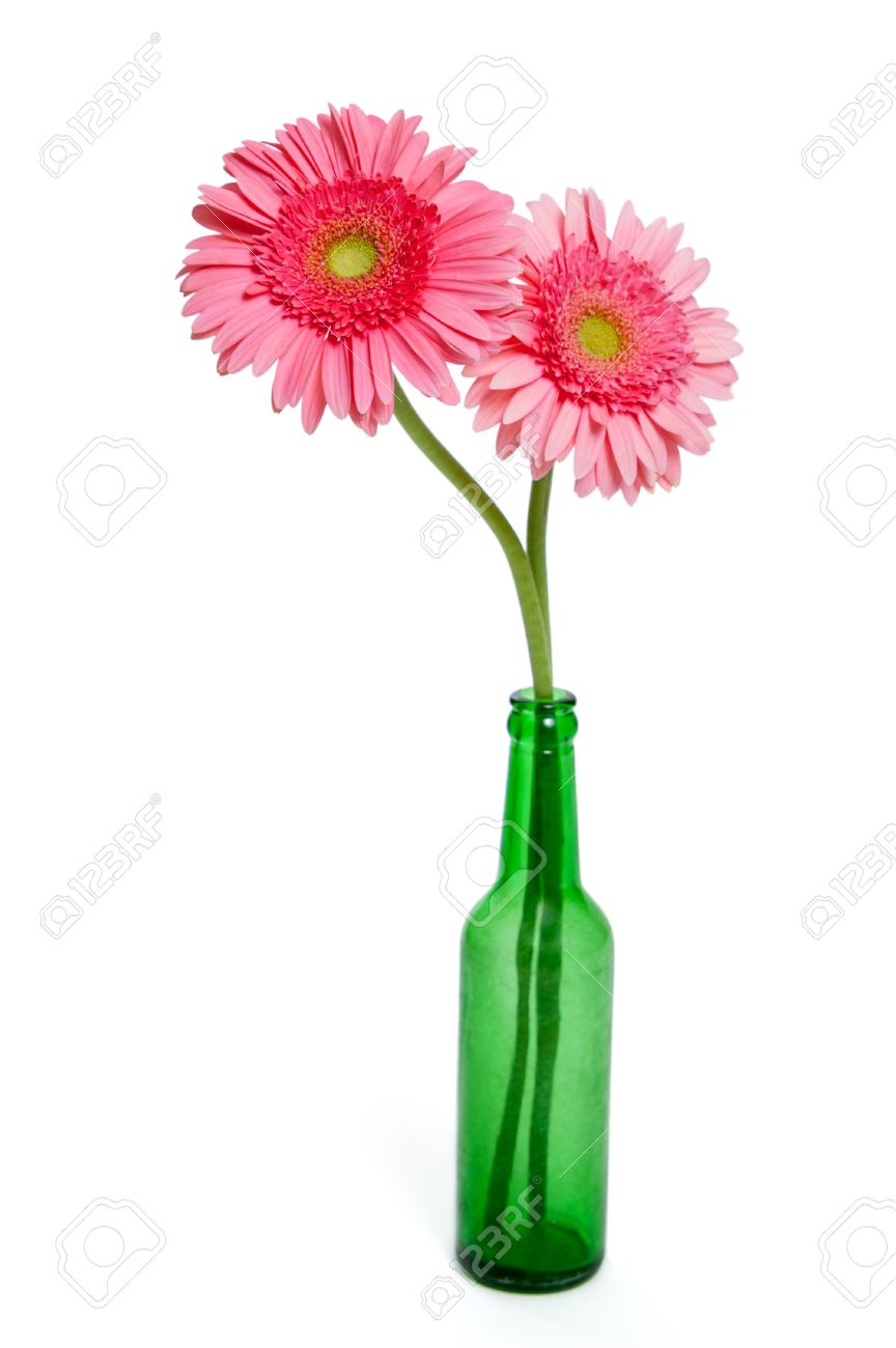 Two pink gerber daisies in a green glass bottle vase isolated two pink gerber daisies in a green glass bottle vase isolated on white stock photo reviewsmspy