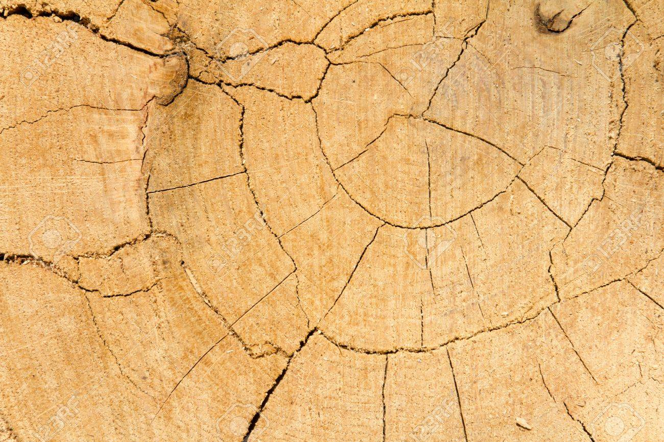 Oak tree cut wooden texture background Stock Photo - 15975775