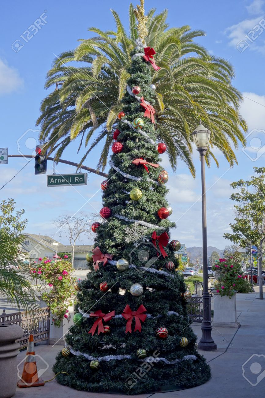 christmas tree in front of king palm distinctive southern california holiday street in city of - Palm Christmas Tree