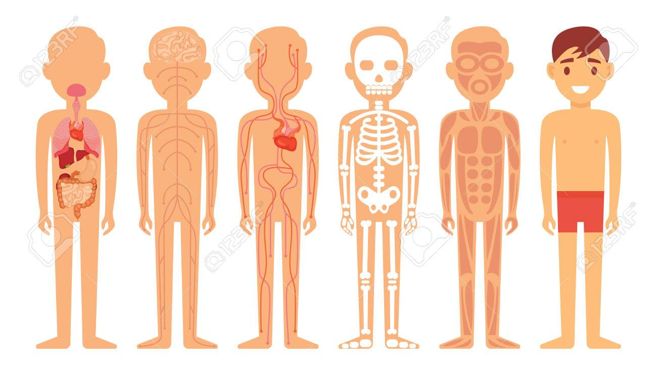 Different Systems Of Human Body Diagram Illustration Stock Photo