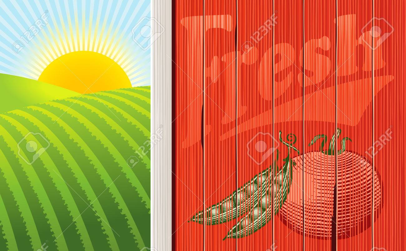 Vector illustration of the side of a barn with a faded vegetable illustration, and a sunrise over some fields. Multi-layered for easy editing. Stock Vector - 4653973