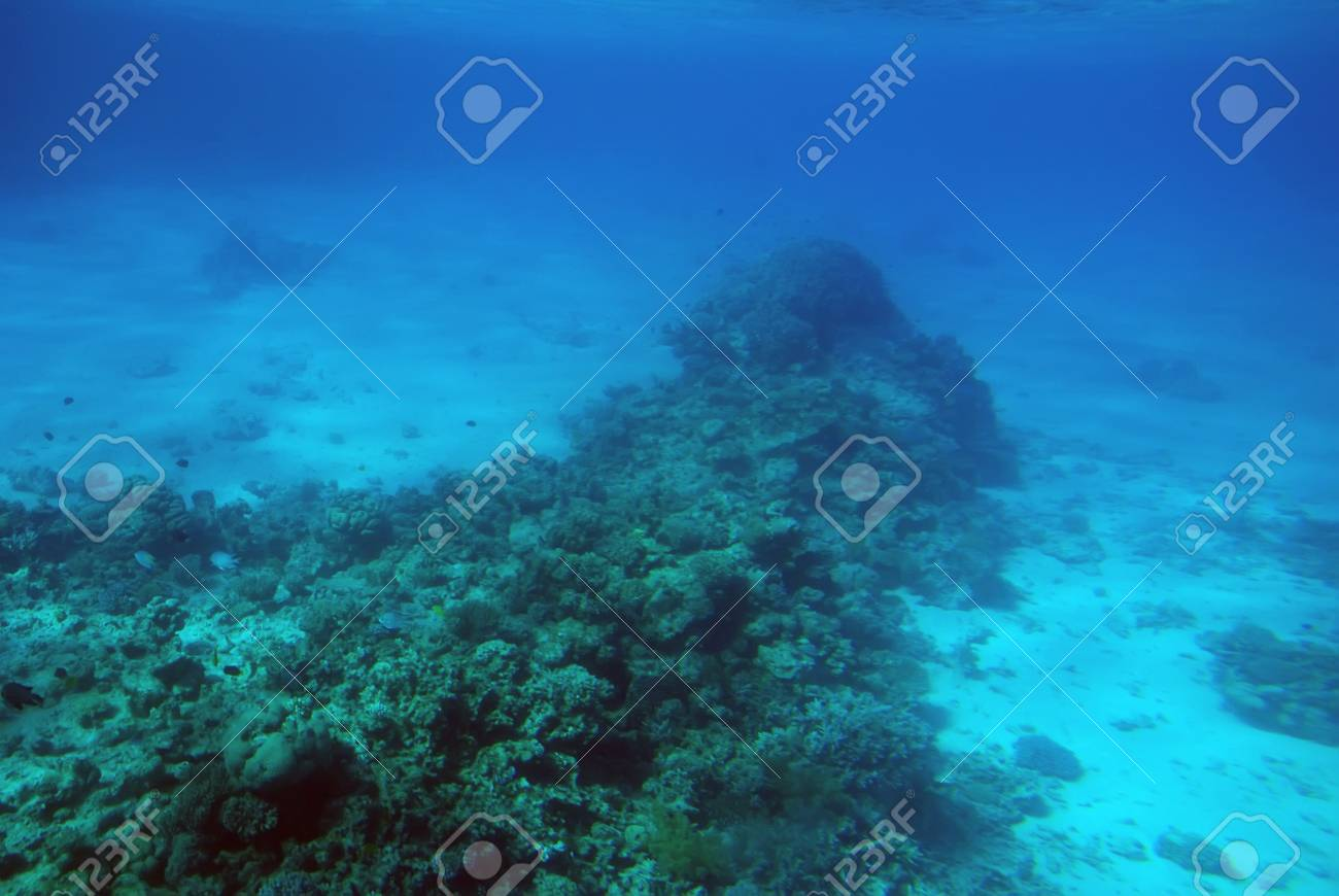 Underwater scene of a tropical coral reef. Stock Photo - 4920890