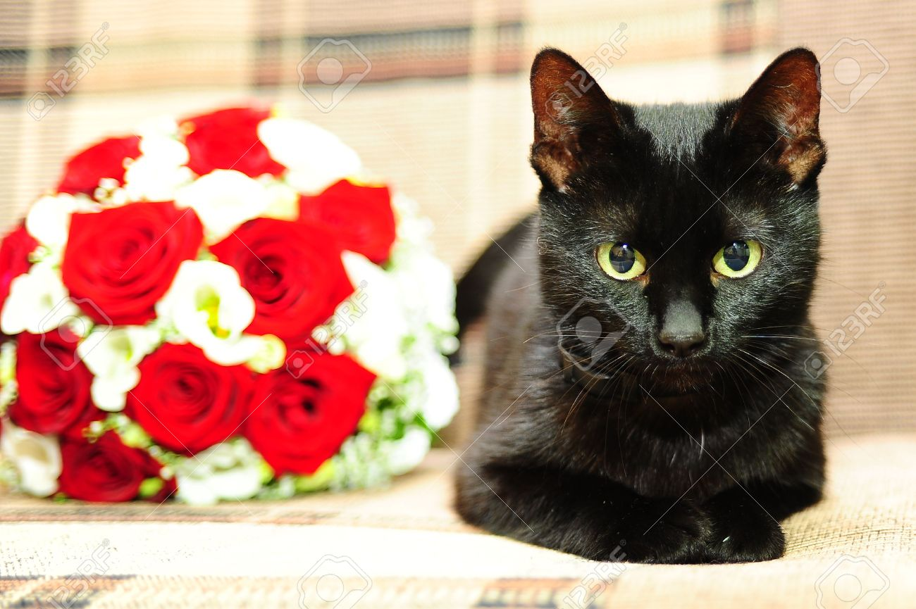 Black Cat Next To A Bouquet Of Flowers Stock Photo, Picture And ...