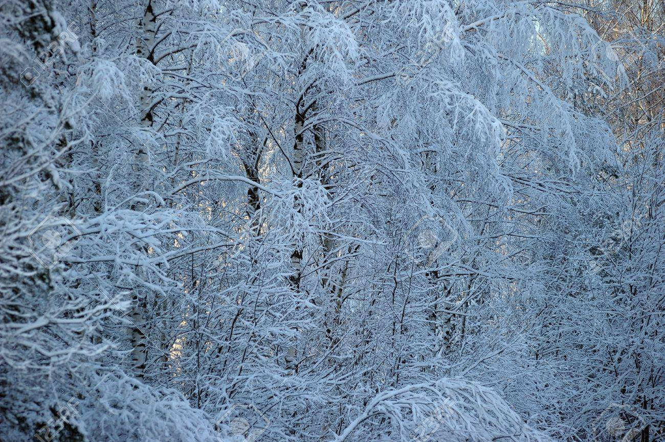 Winter Stock Photo - 11976298