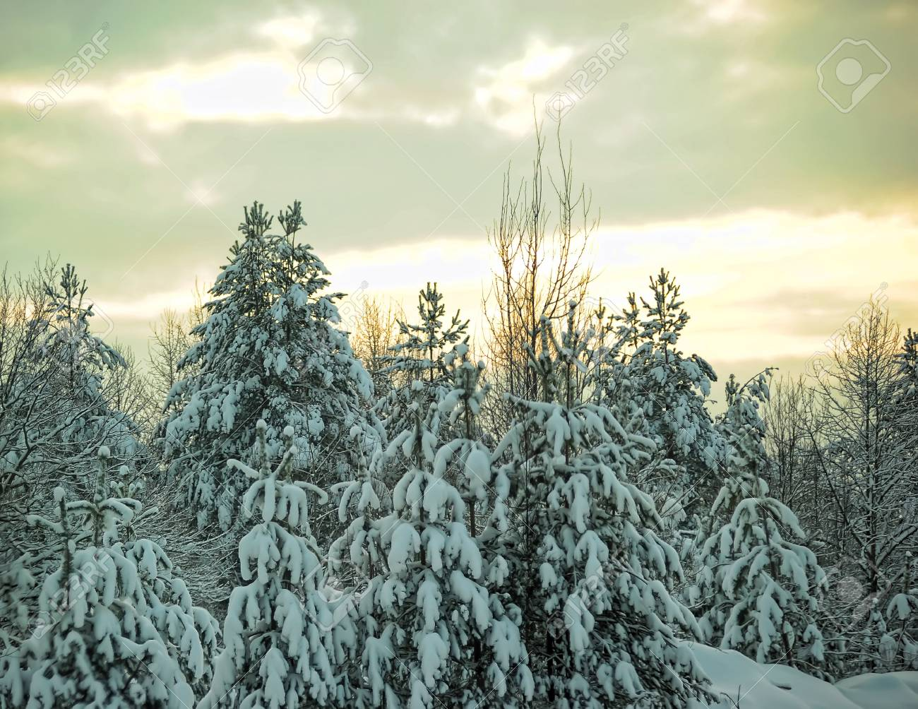 Sunset in winter forest Stock Photo - 8914038