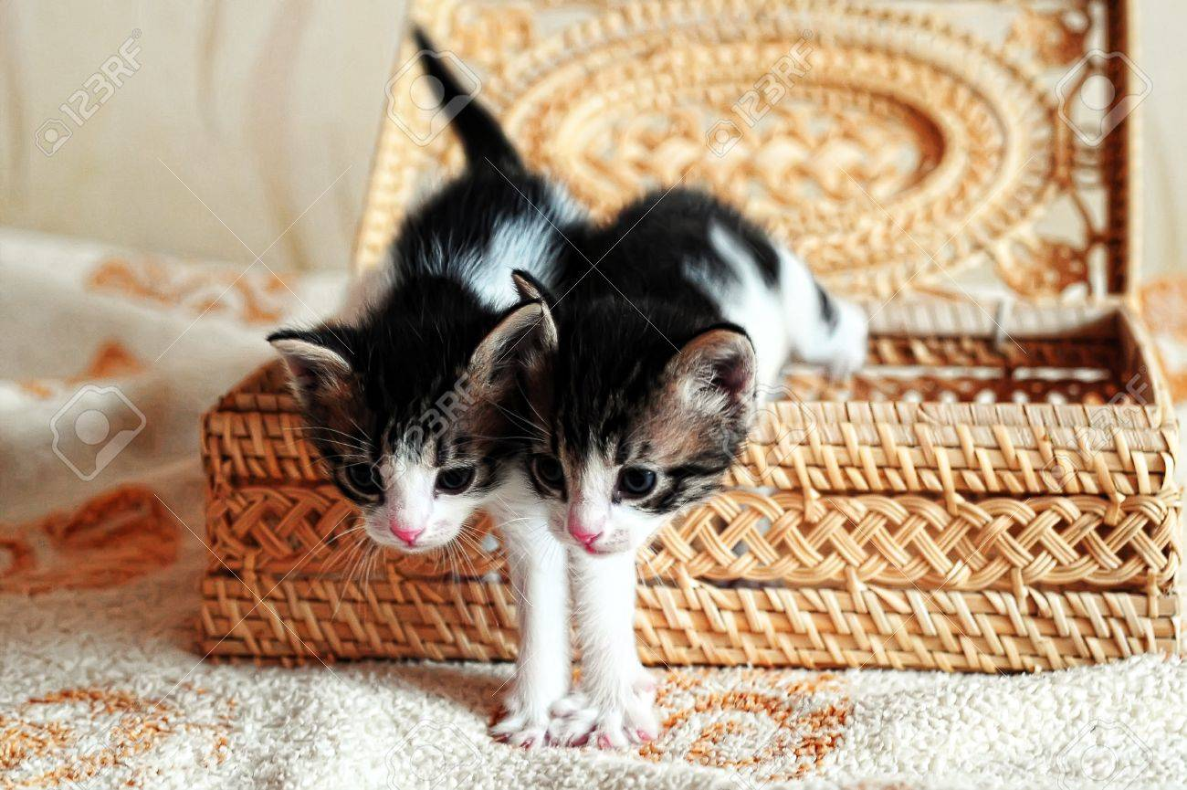 Kittens in a basket Stock Photo - 9416200