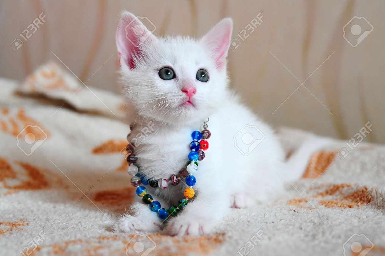 White Kitten Stock Picture And Royalty Free Image Image