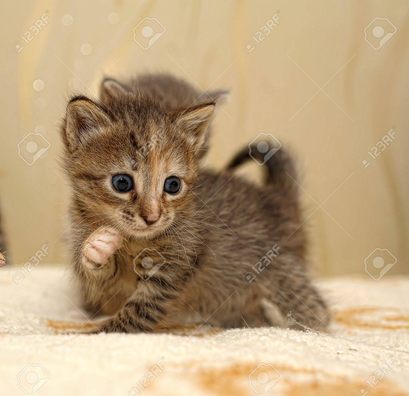 little kitty Stock Photo - 10448453