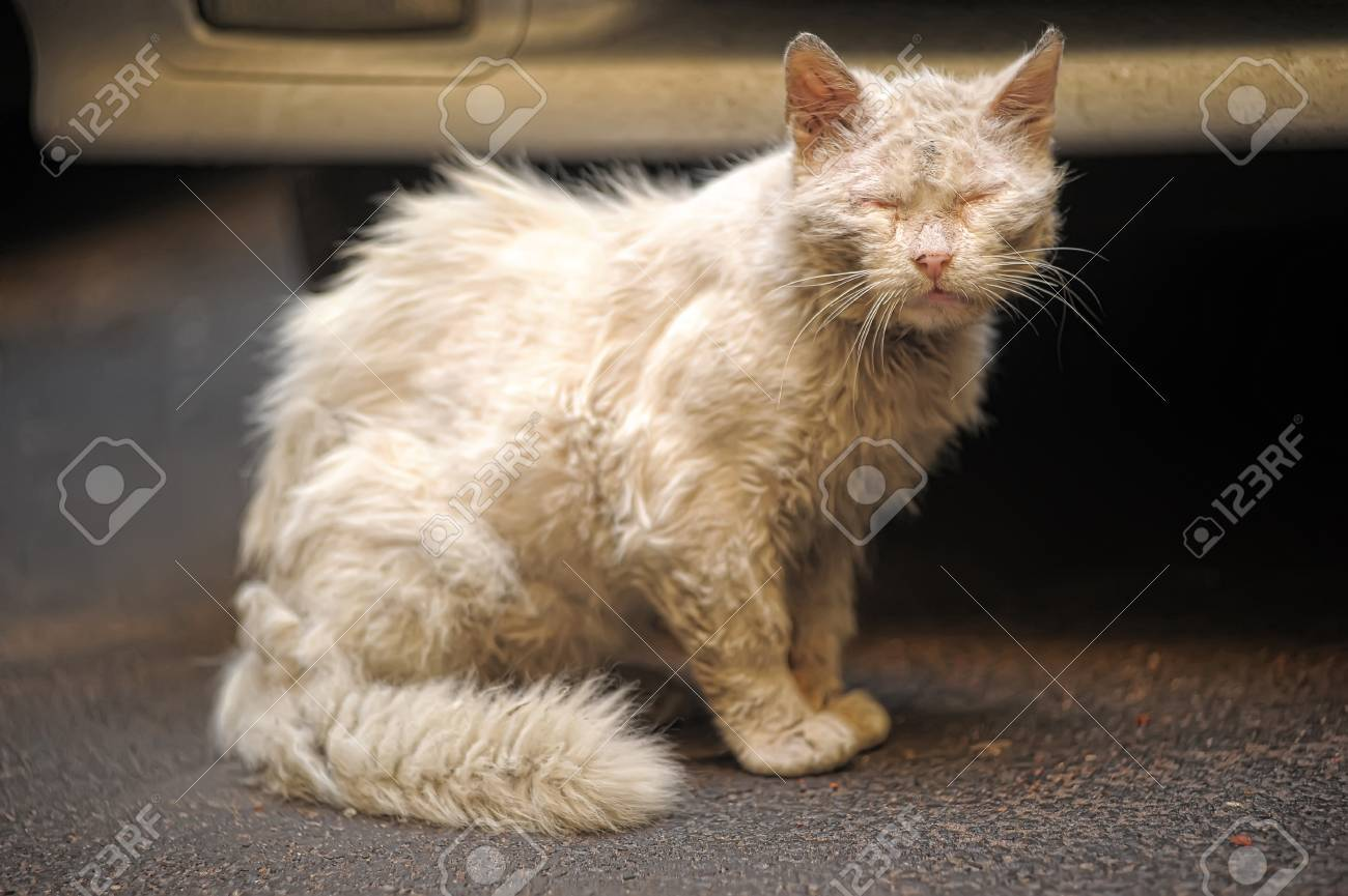Another portrait of the miss fortune homeless animal Stock Photo - 10074444
