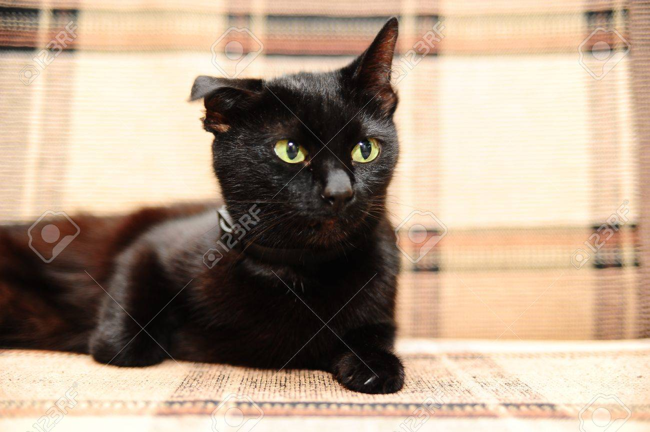 black cat lying on the couch Stock Photo - 10097513
