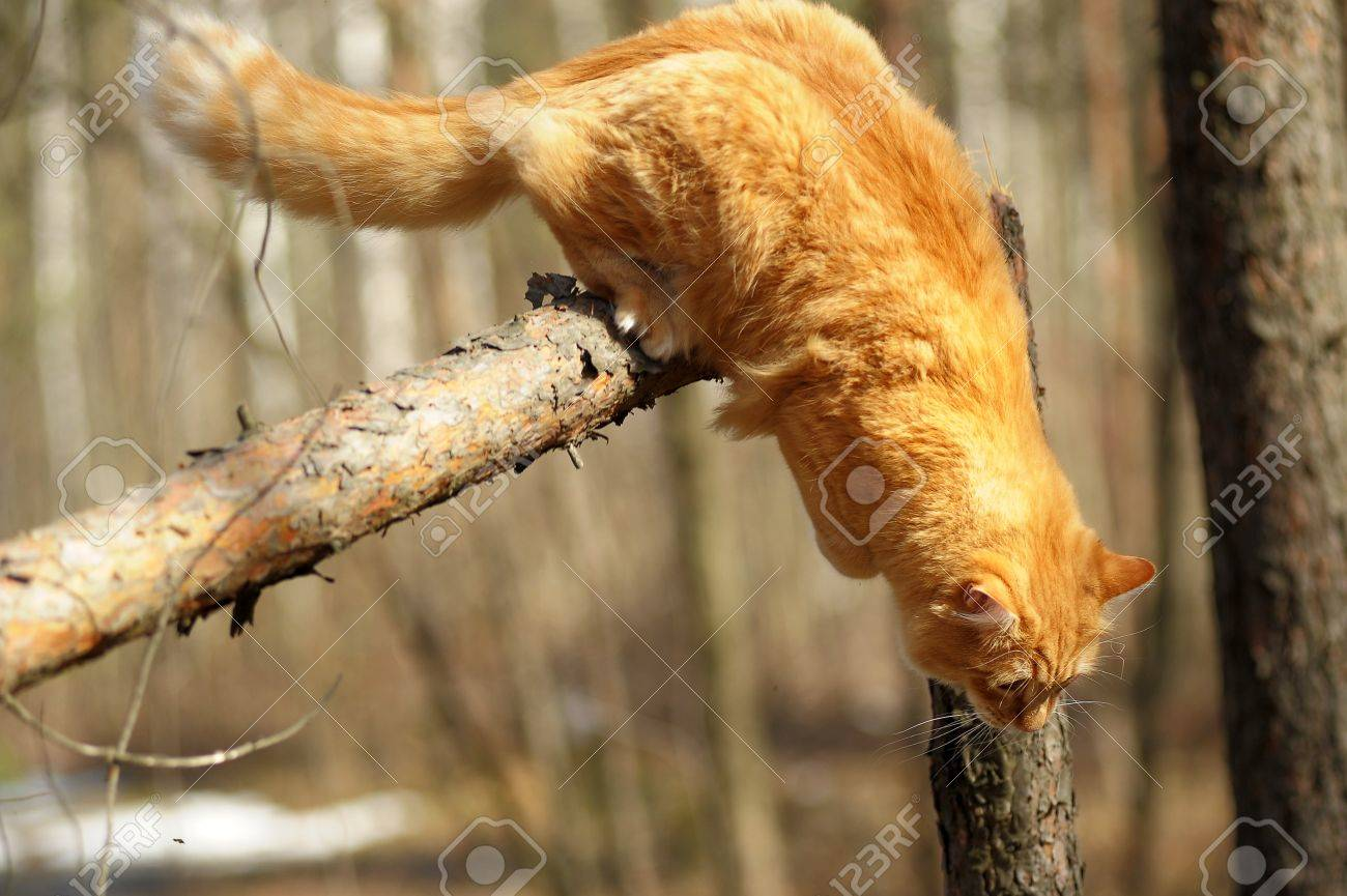 beautiful fluffy ginger cat in the park Stock Photo - 10845005