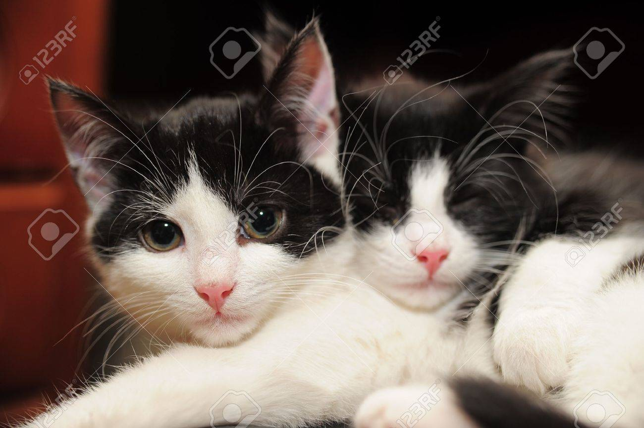 two black and white cat lying Stock Photo - 11573930