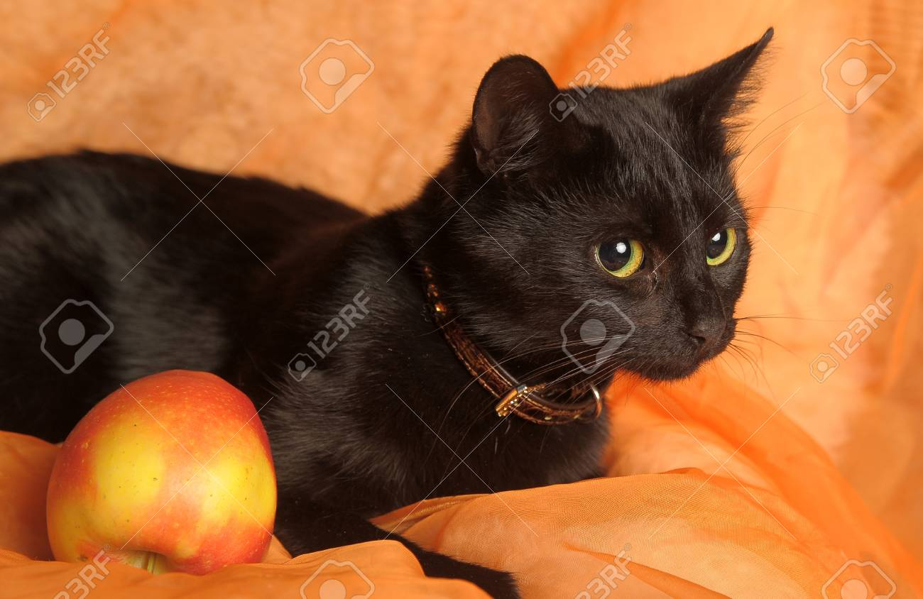 black cat with apple on an orange background Stock Photo - 13683687
