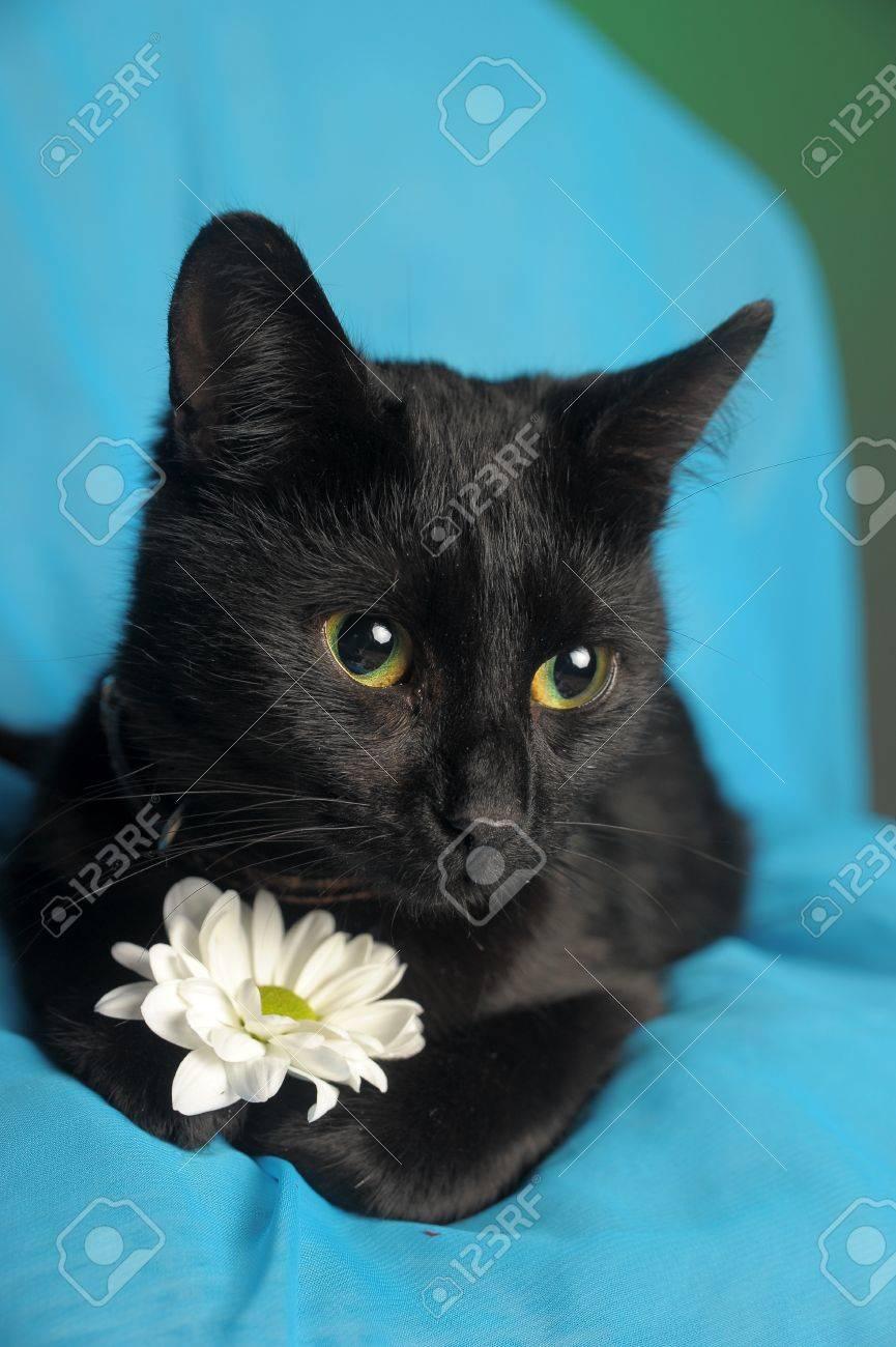 Черный кот с цветком