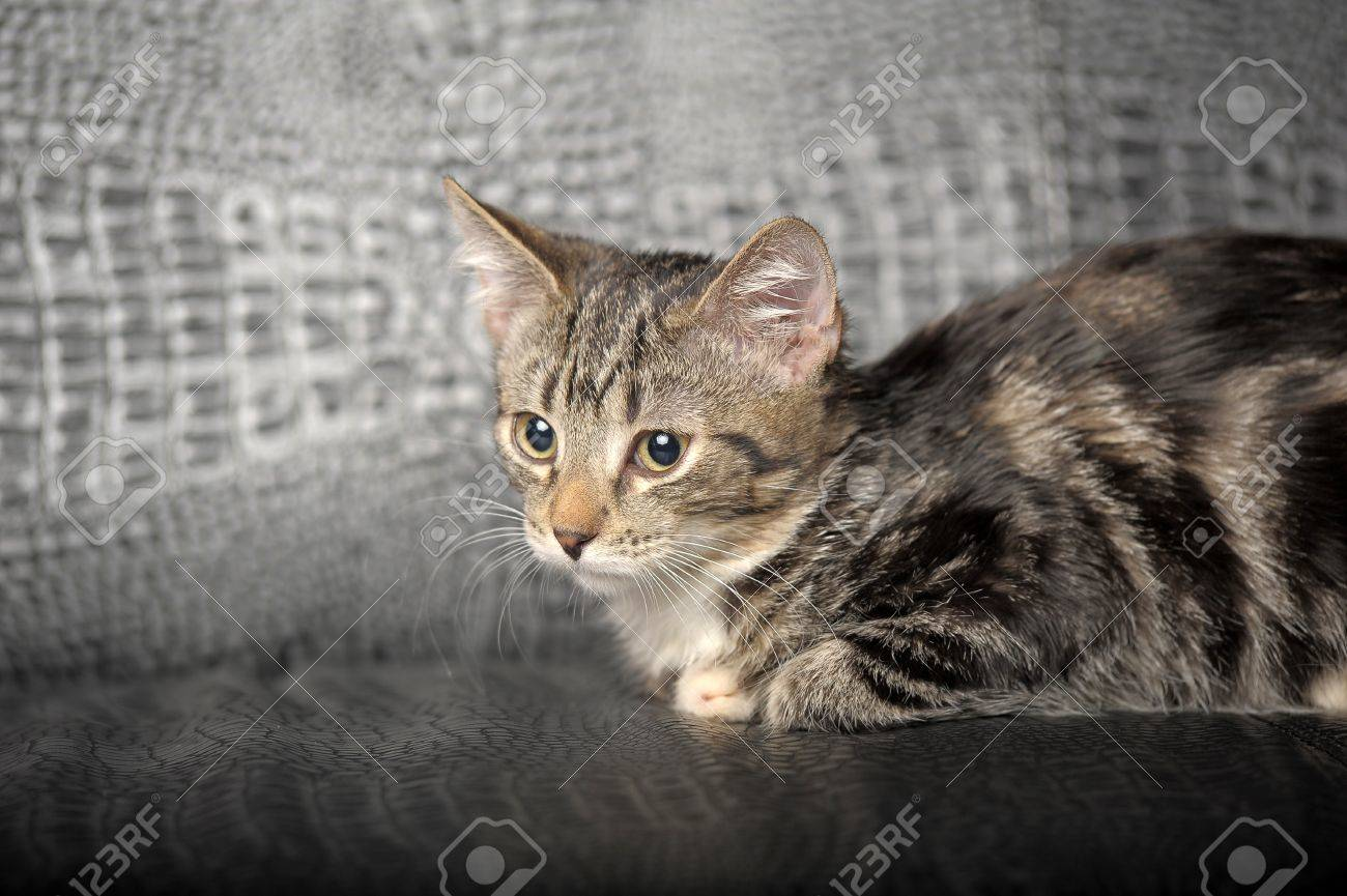 A marble  cat Stock Photo - 11257058