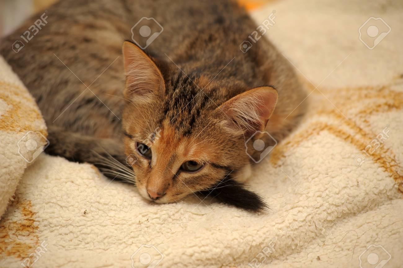 The kitten dozes having curtailed Stock Photo - 11952728