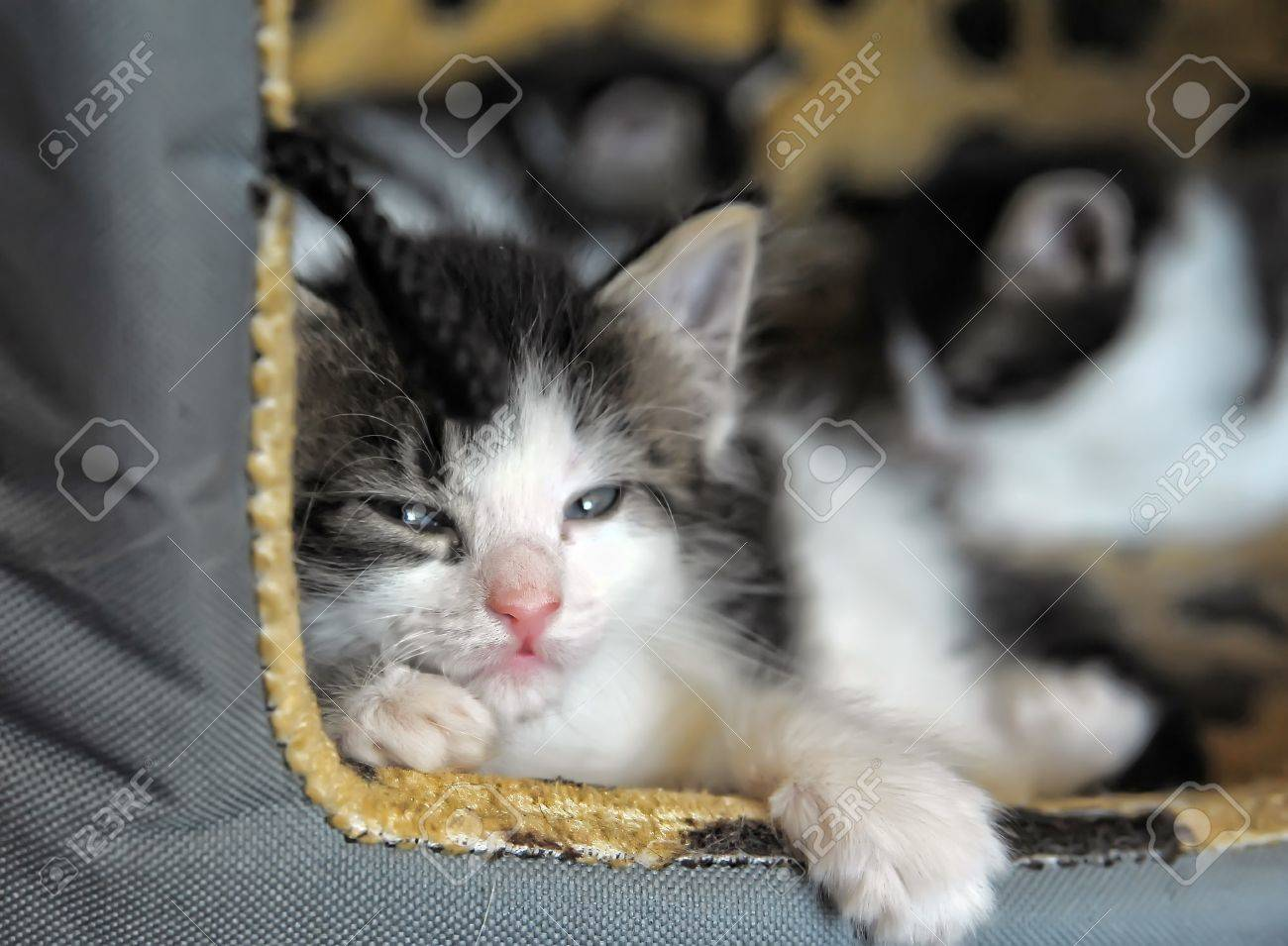 Sweet sleeping kitten Stock Photo - 13734566