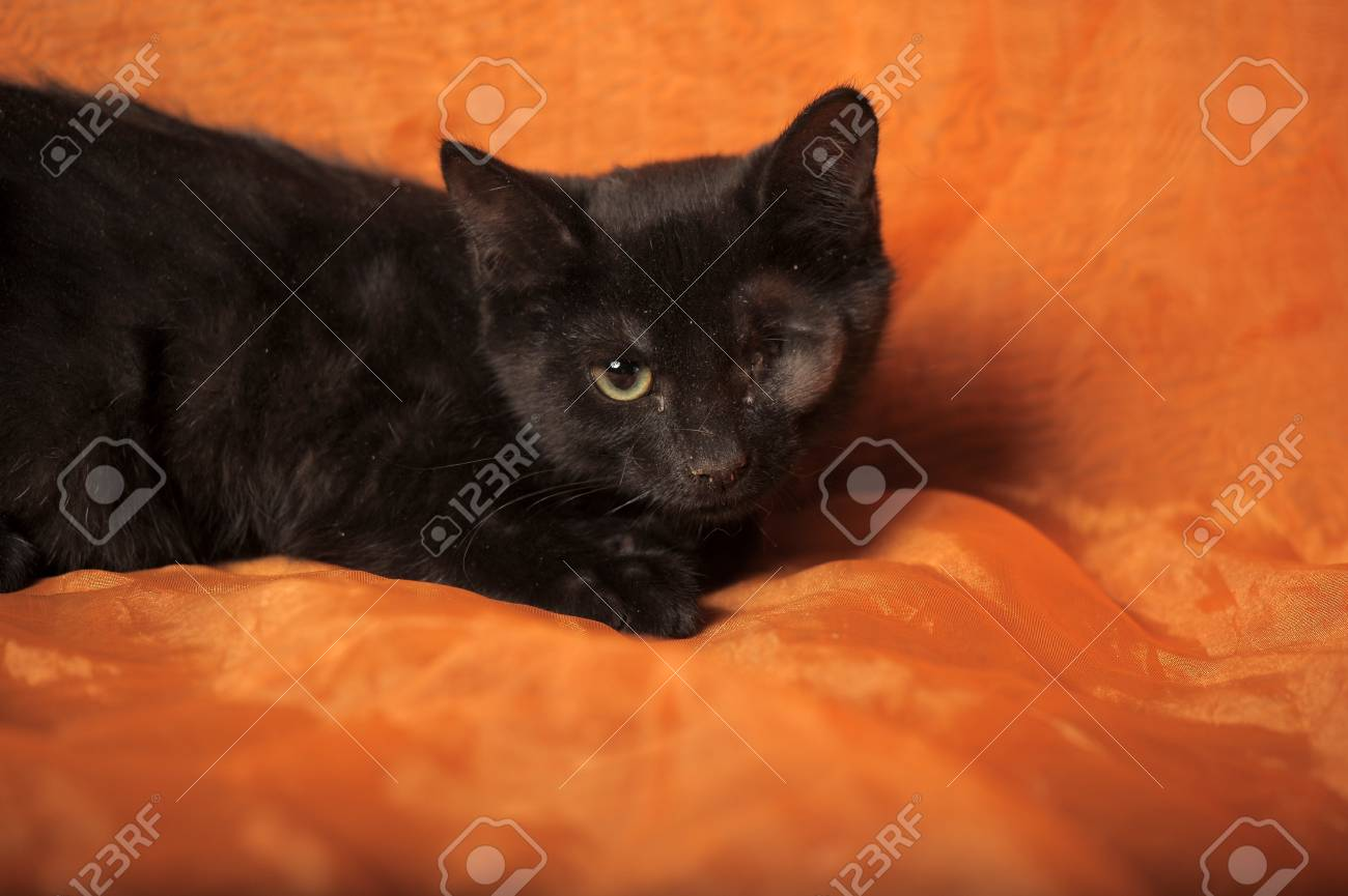 one-eyed kitten Stock Photo - 13552525