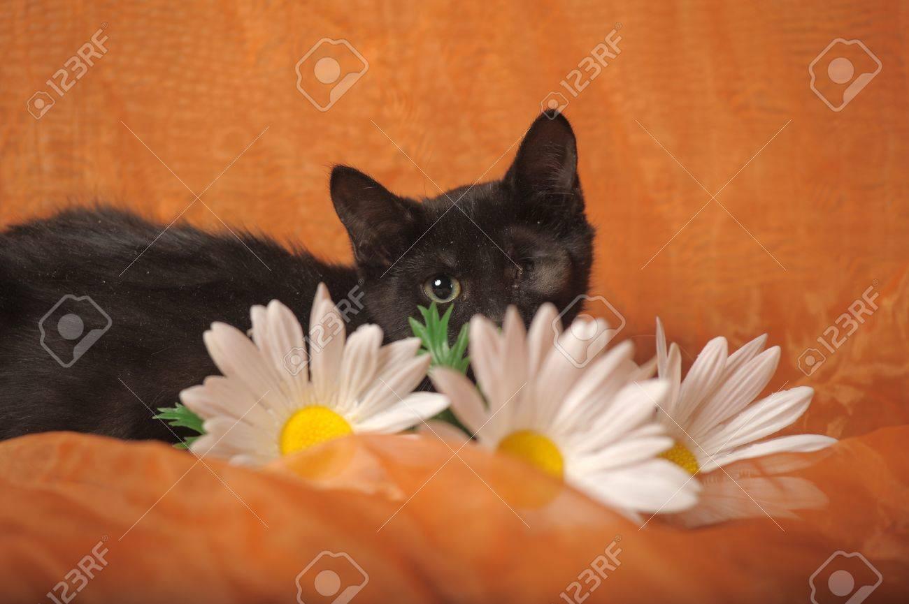 one-eyed kitten Stock Photo - 13552498