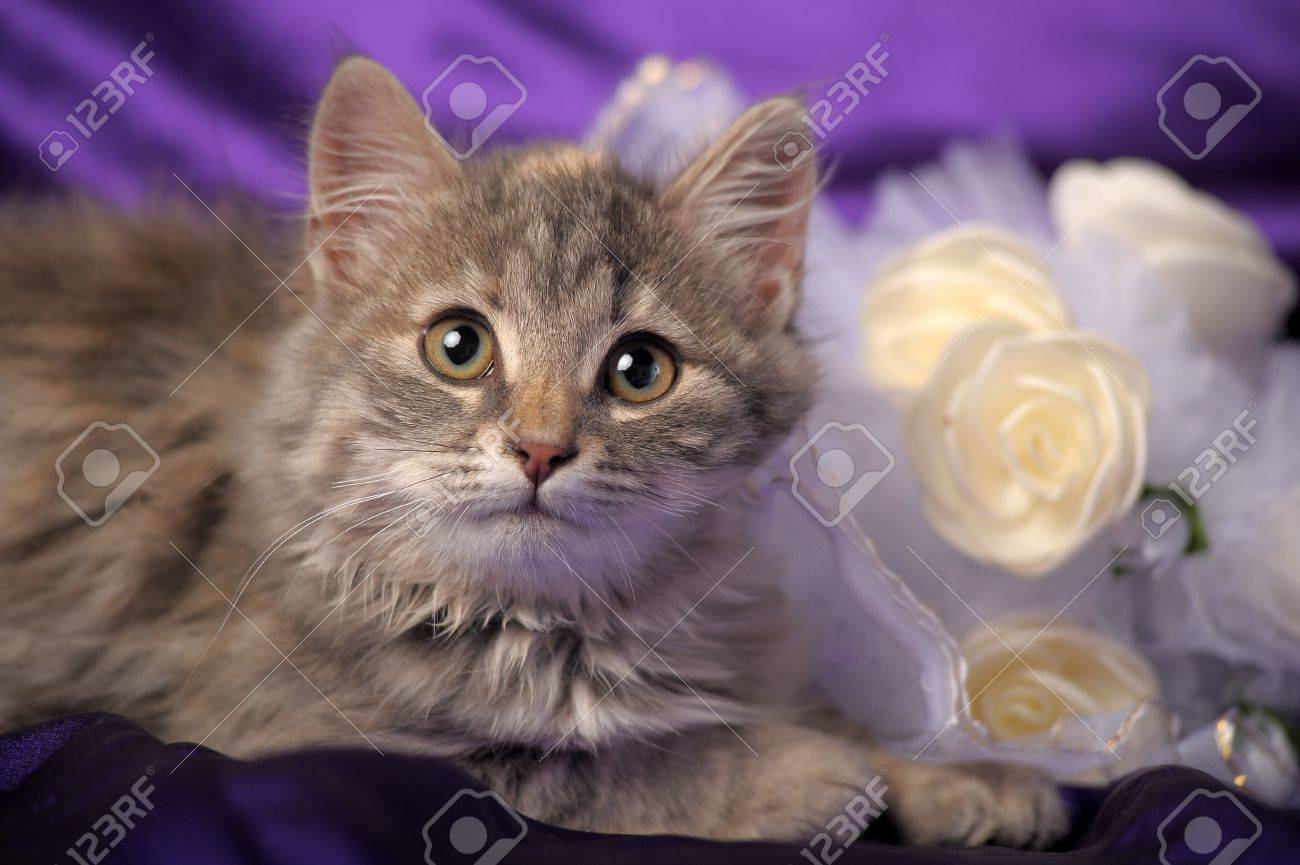 Wedding Bouquet and a cute cat. Stock Photo - 12046217