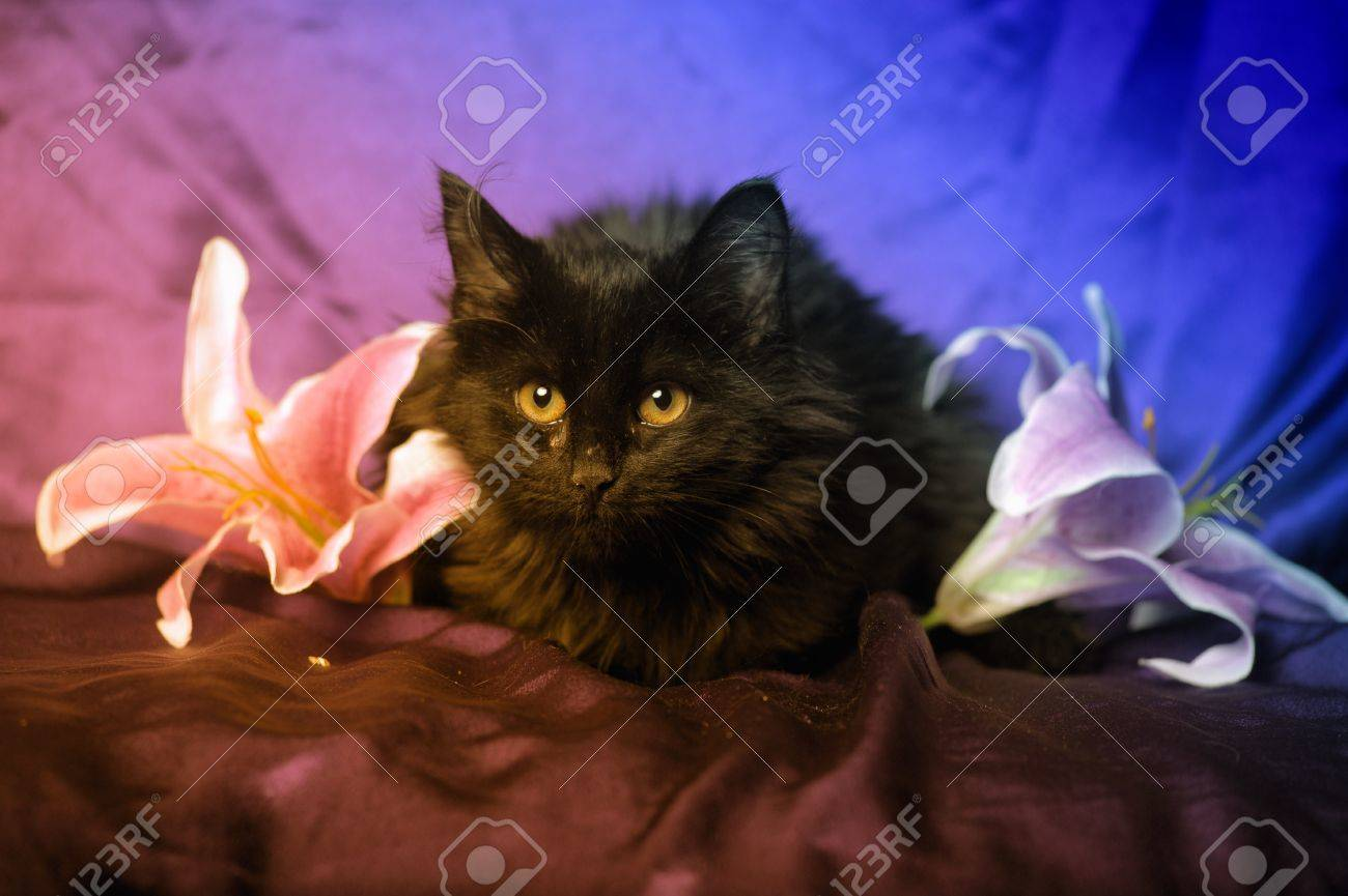 Black Cat And Lily Flower Stock Photo Picture And Royalty Free