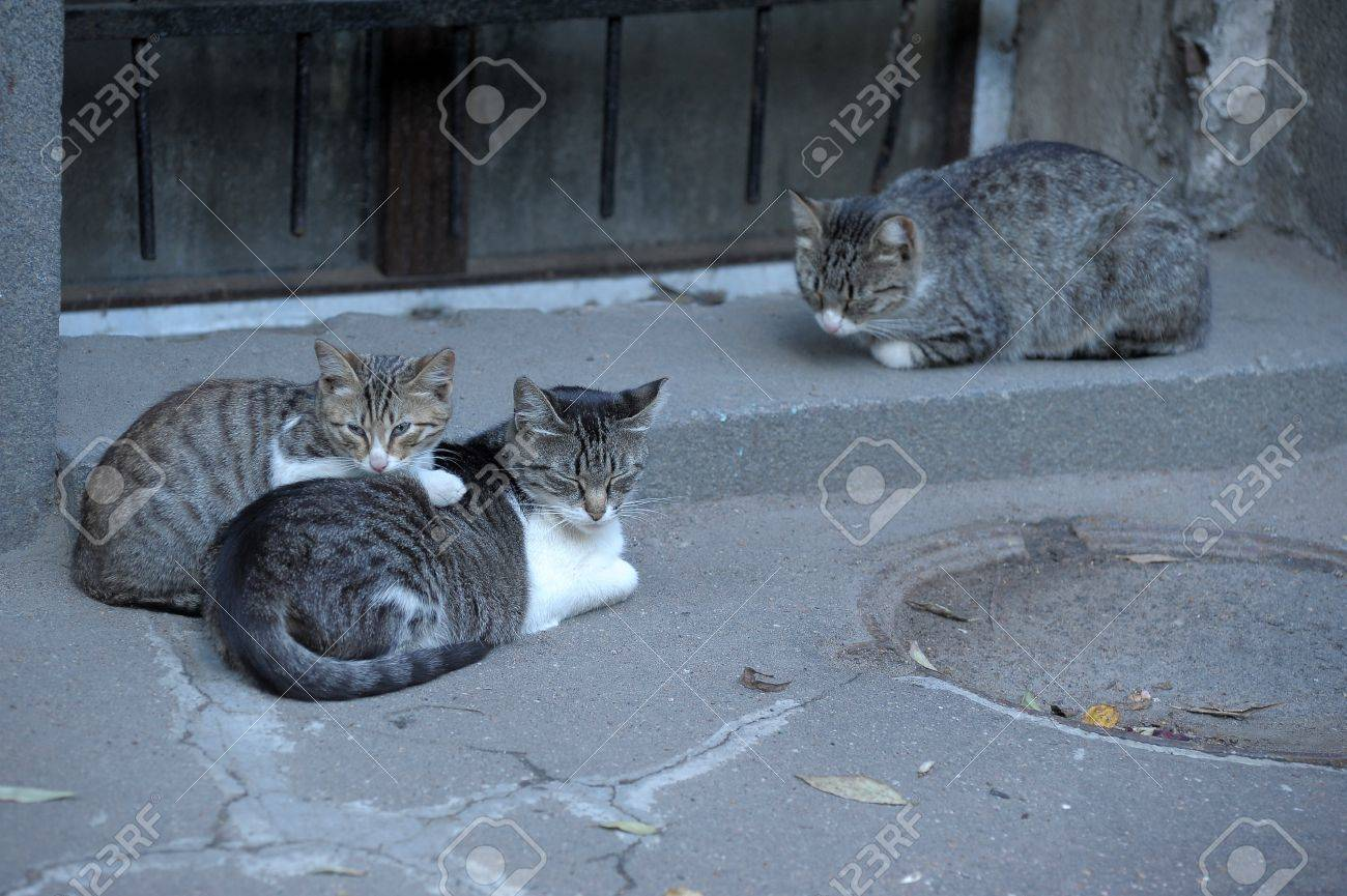 HOMELESS CATS Stock Photo - 13253160