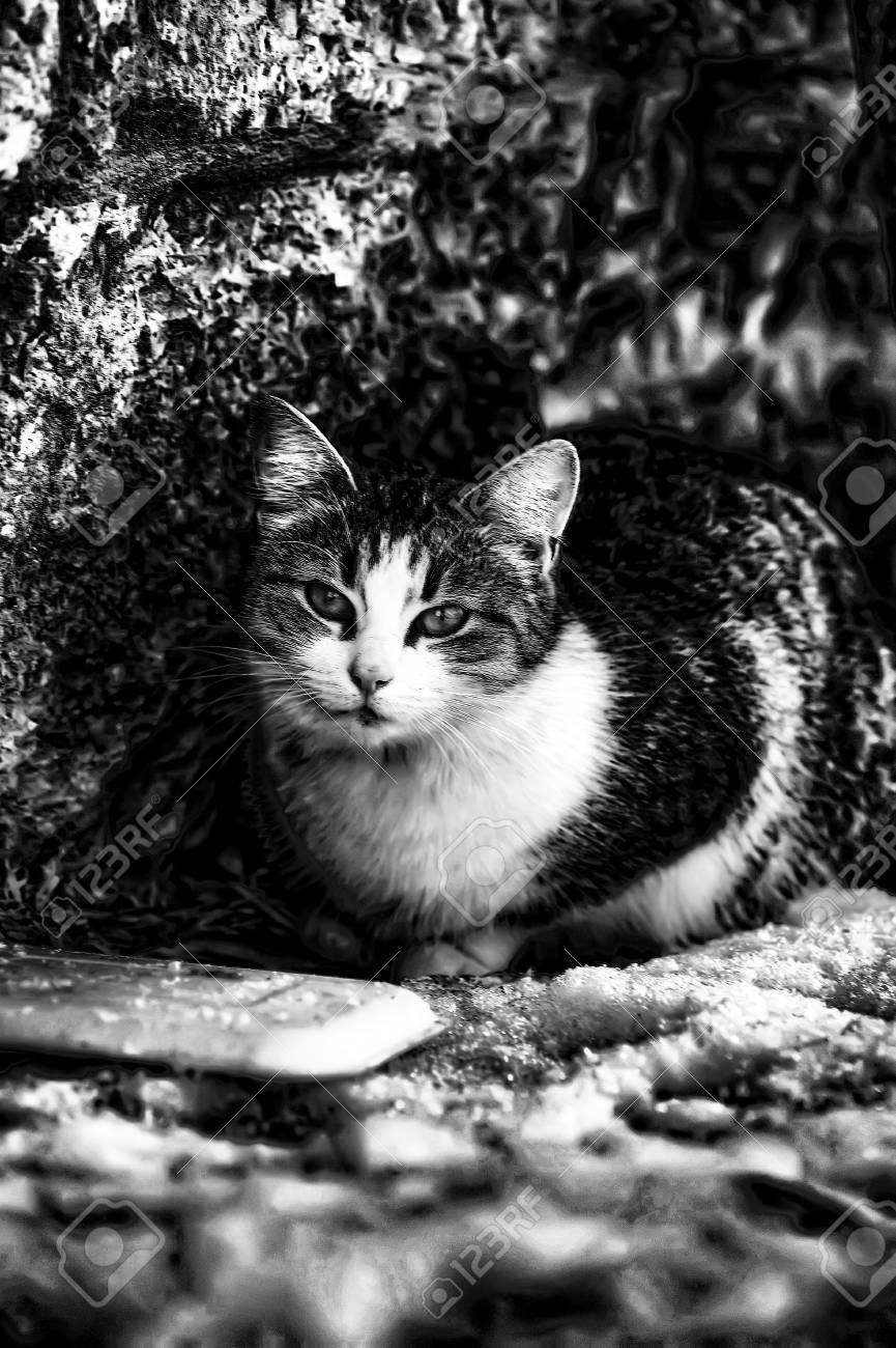 HOMELESS CAT Stock Photo - 12879507
