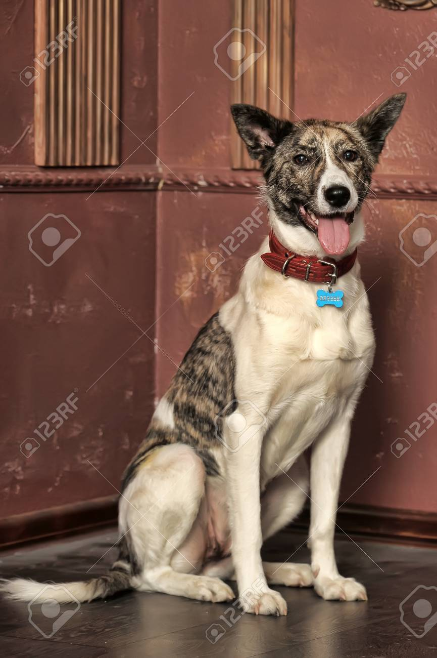 Dog portrait Stock Photo - 13146486