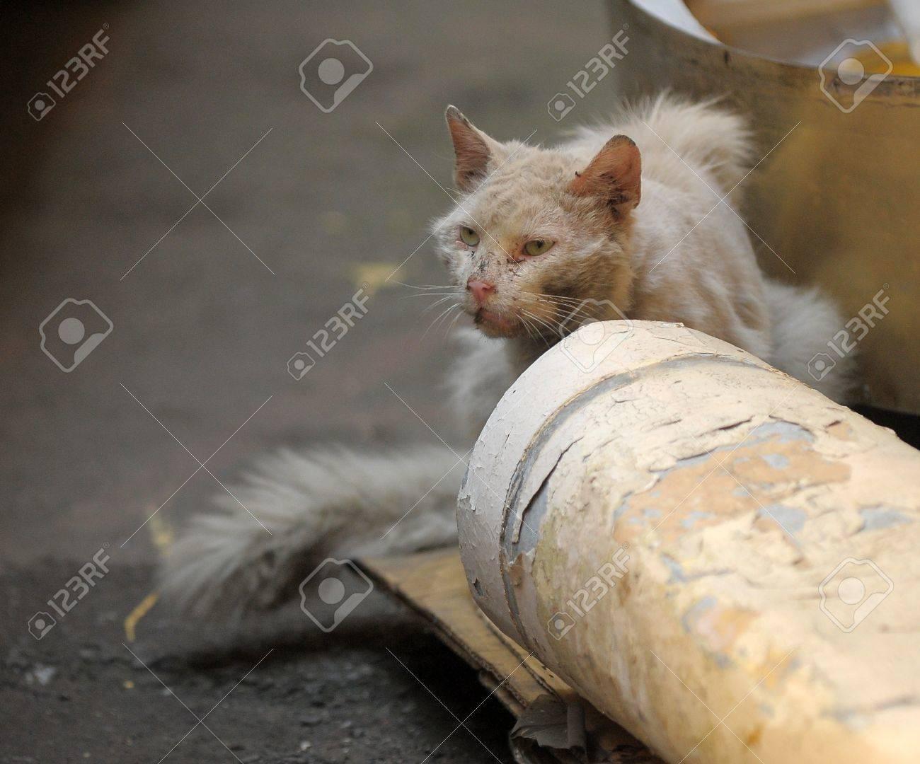 homeless cat , on empty street wait for better days Stock Photo - 13443886
