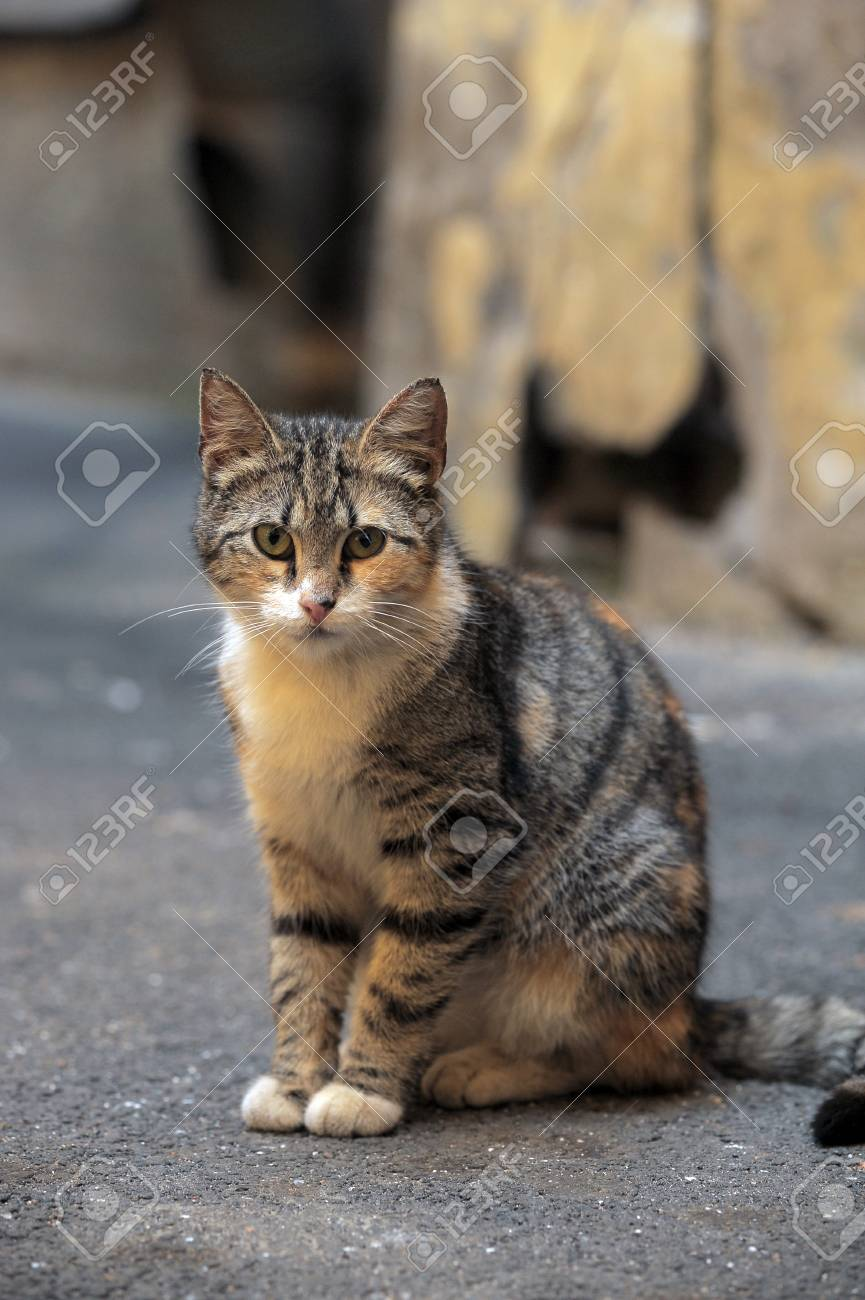 Another portrait of the miss fortune homeless animal Stock Photo - 13444292