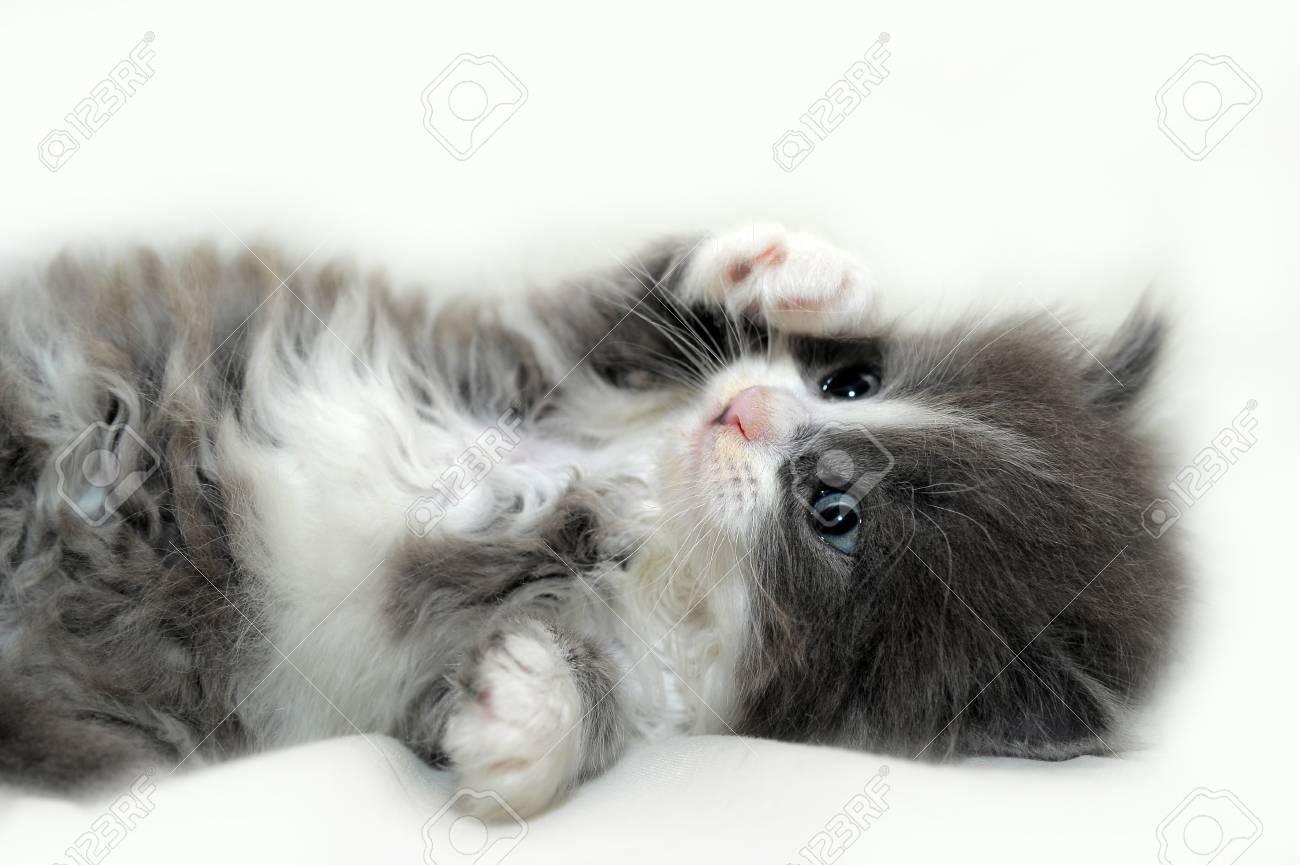 Kitten Stock Photo - 13453360