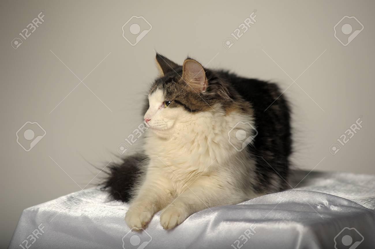 Forest cat  Close-up portrait Stock Photo - 13730878