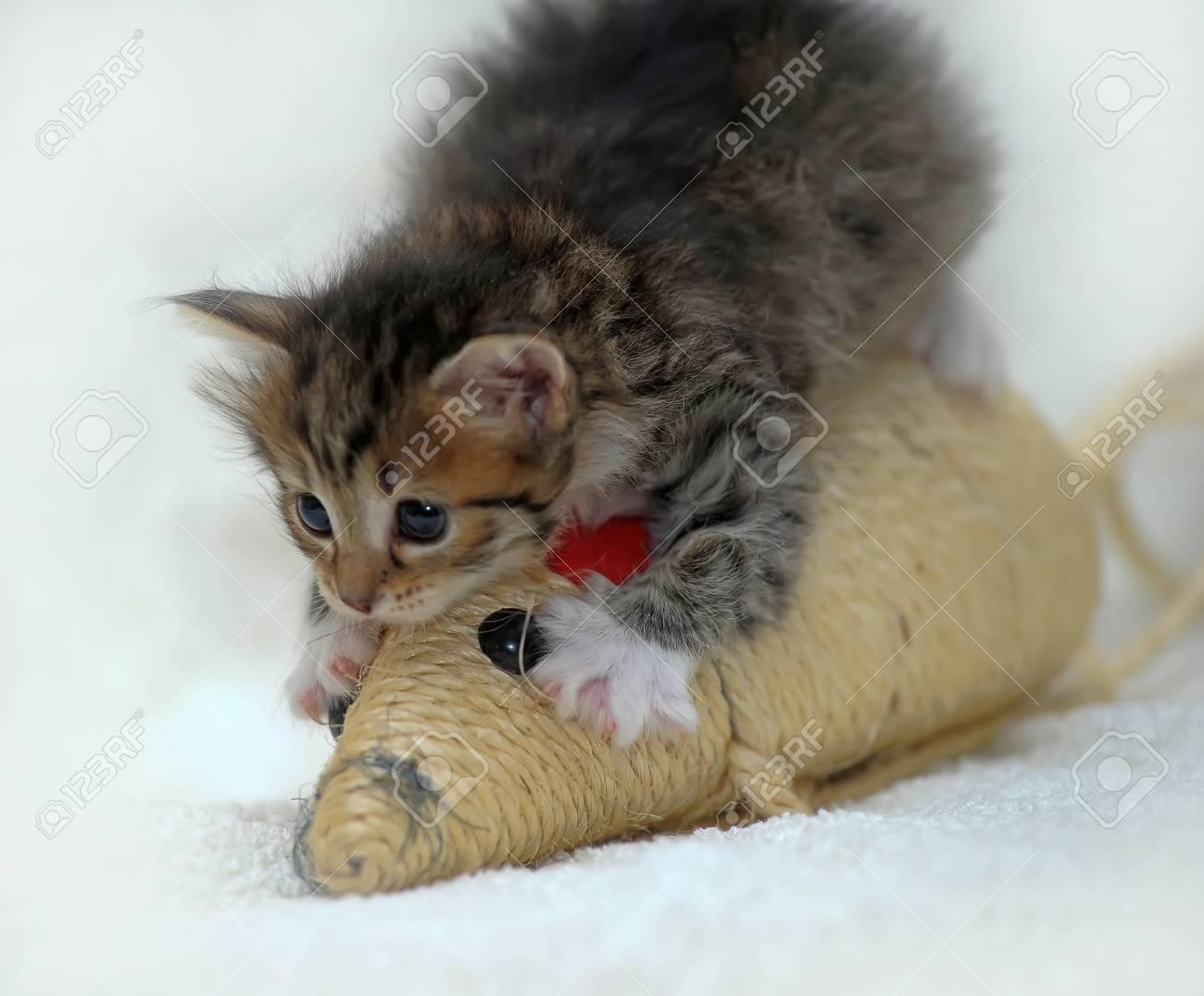 small cute kitten Stock Photo - 13754164