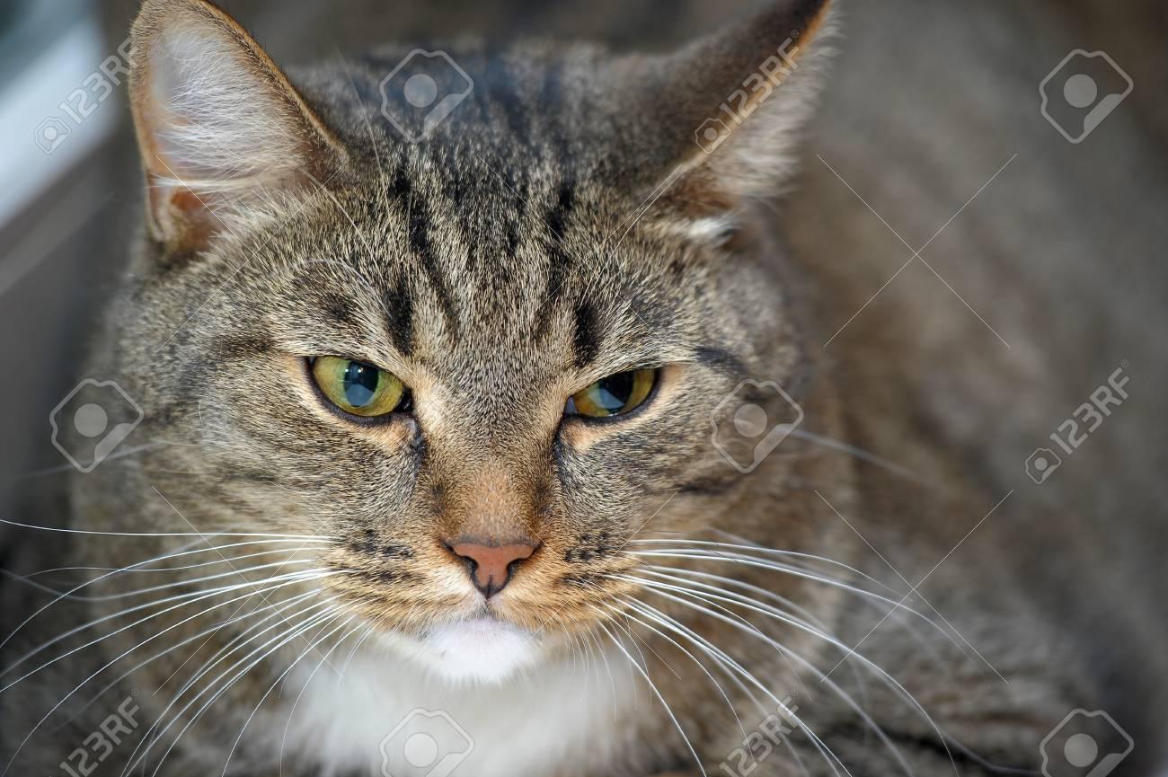 large striped cat Stock Photo - 13813228