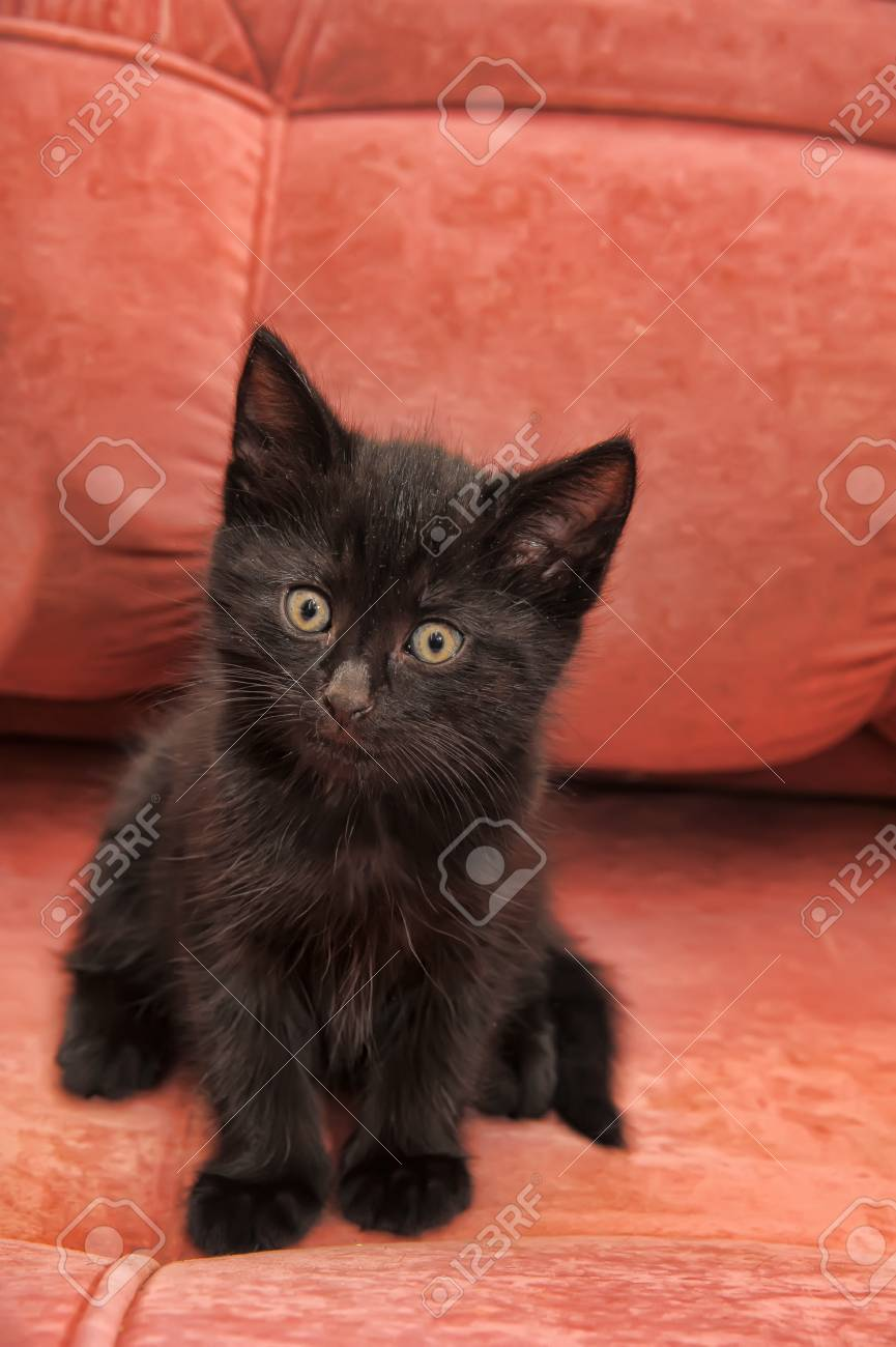 black kitten on the couch Stock Photo - 14329800