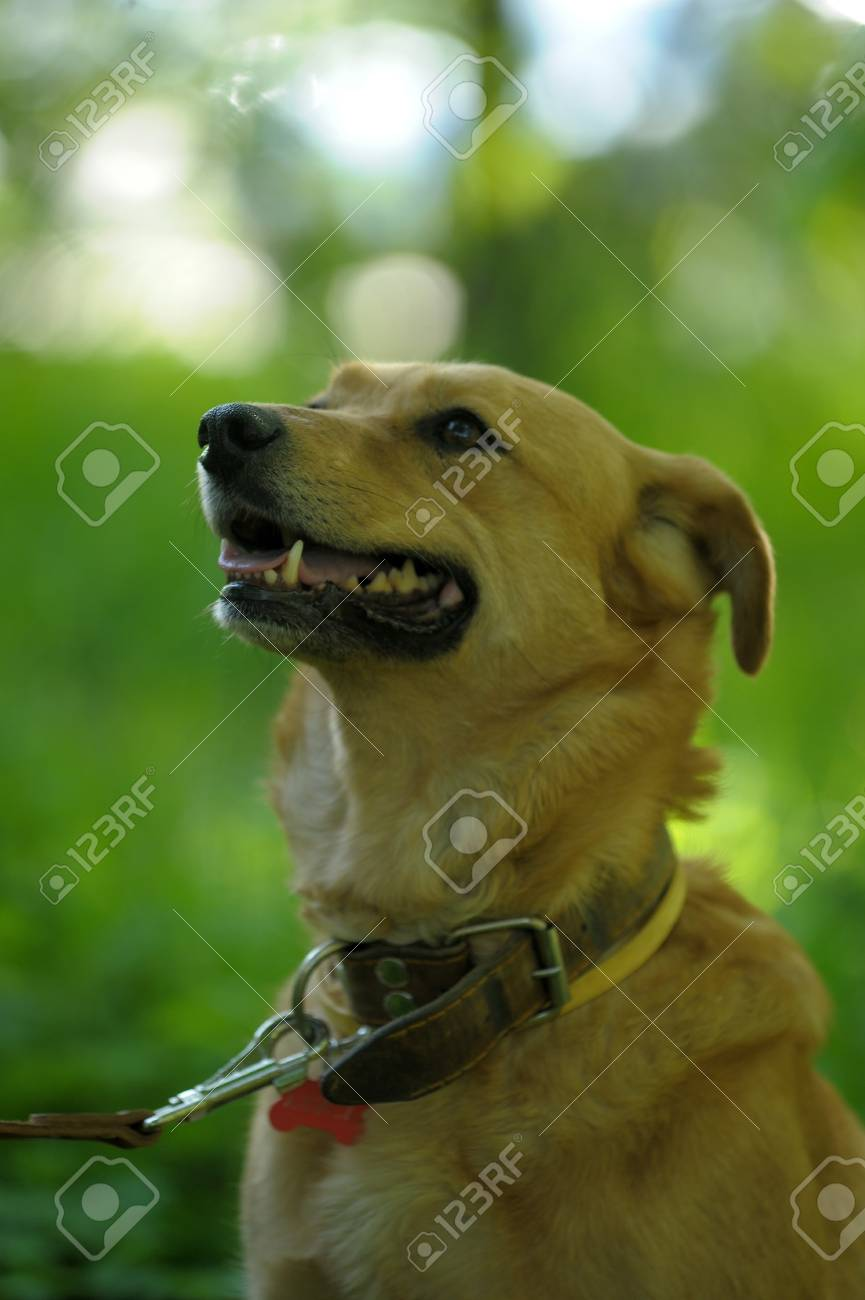 red dog on a green background Stock Photo - 13910336