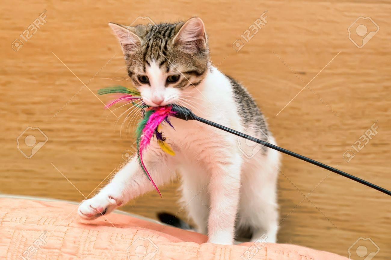 kitten playing Stock Photo - 14270947