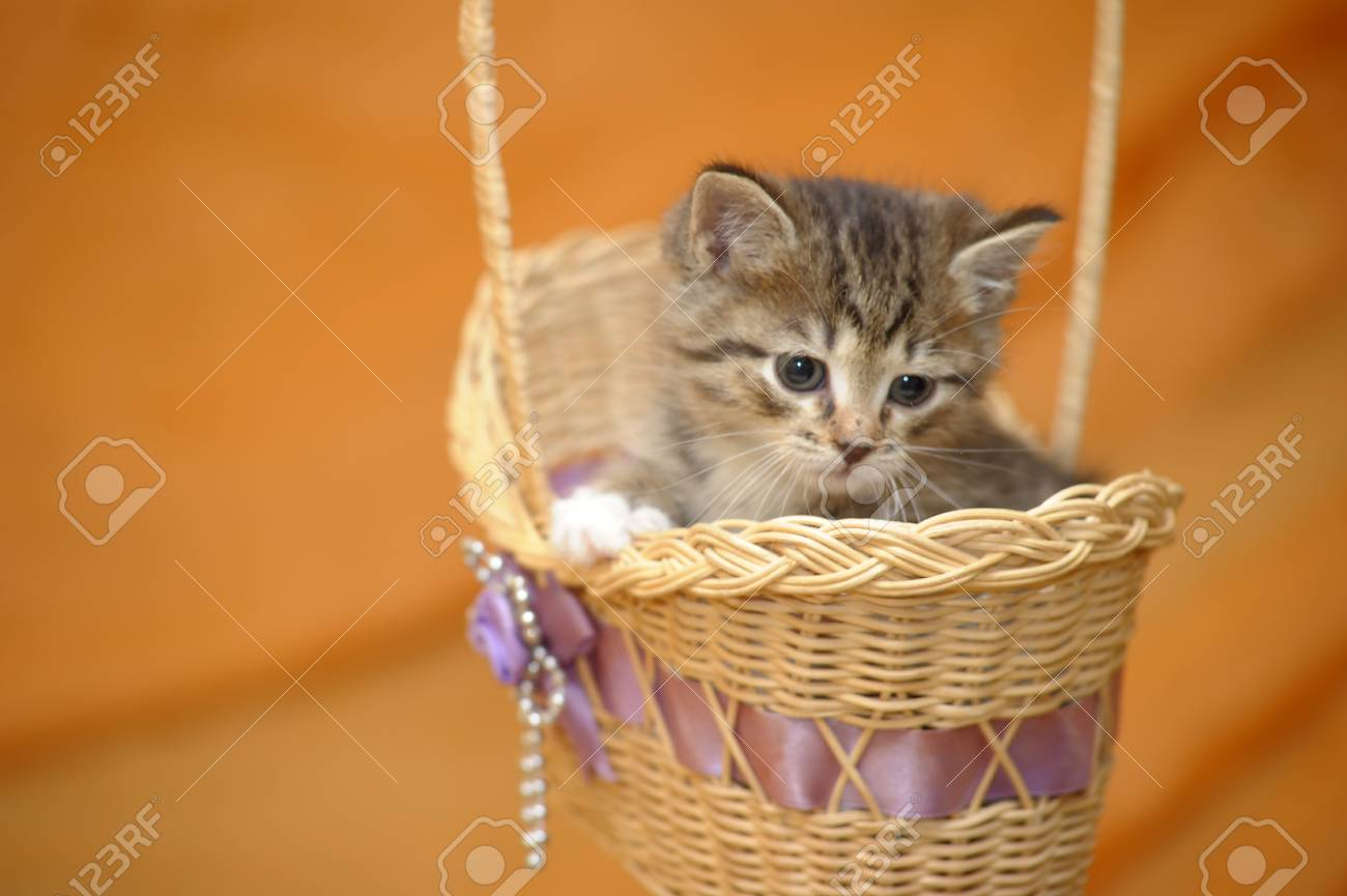 Kitten in a Basket Stock Photo - 14496403