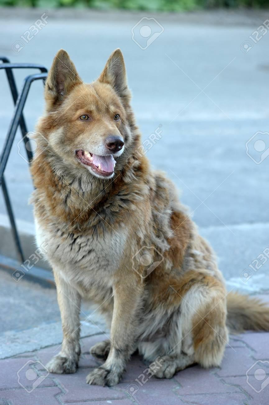 Homeless dog Stock Photo - 14907386