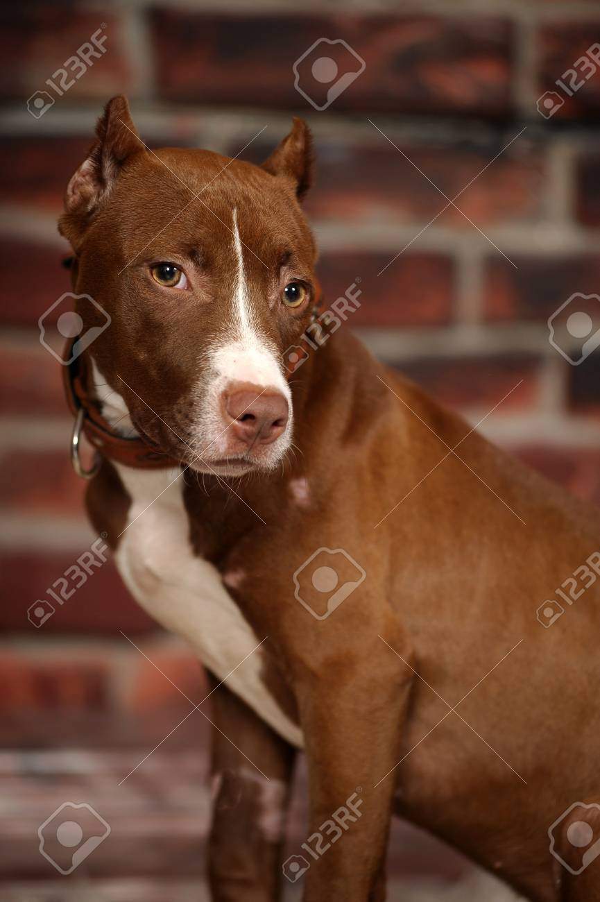 Studio dog Stock Photo - 14856775