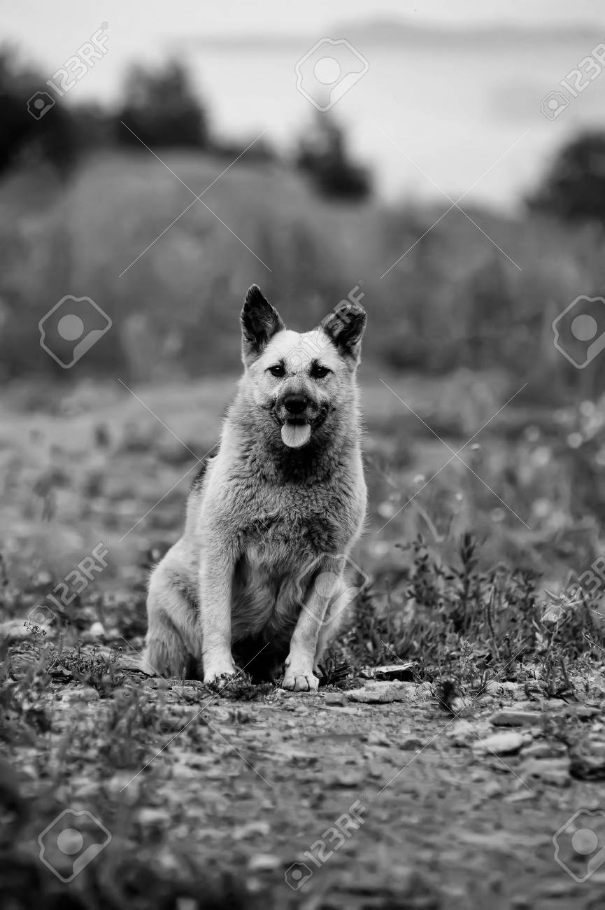 Close up portrait of a stray dog Stock Photo - 15144712