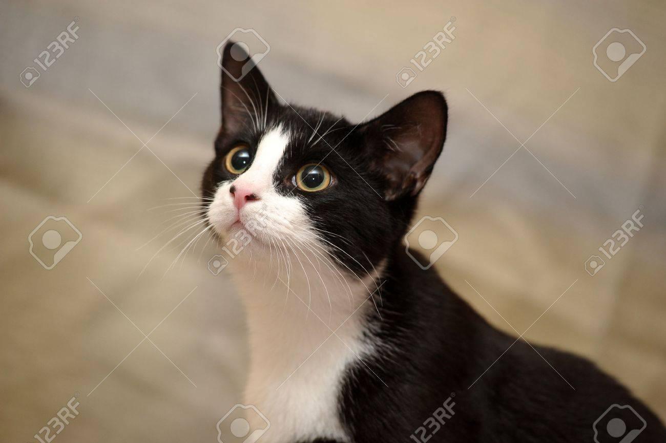 black and white cat Stock Photo - 15323460