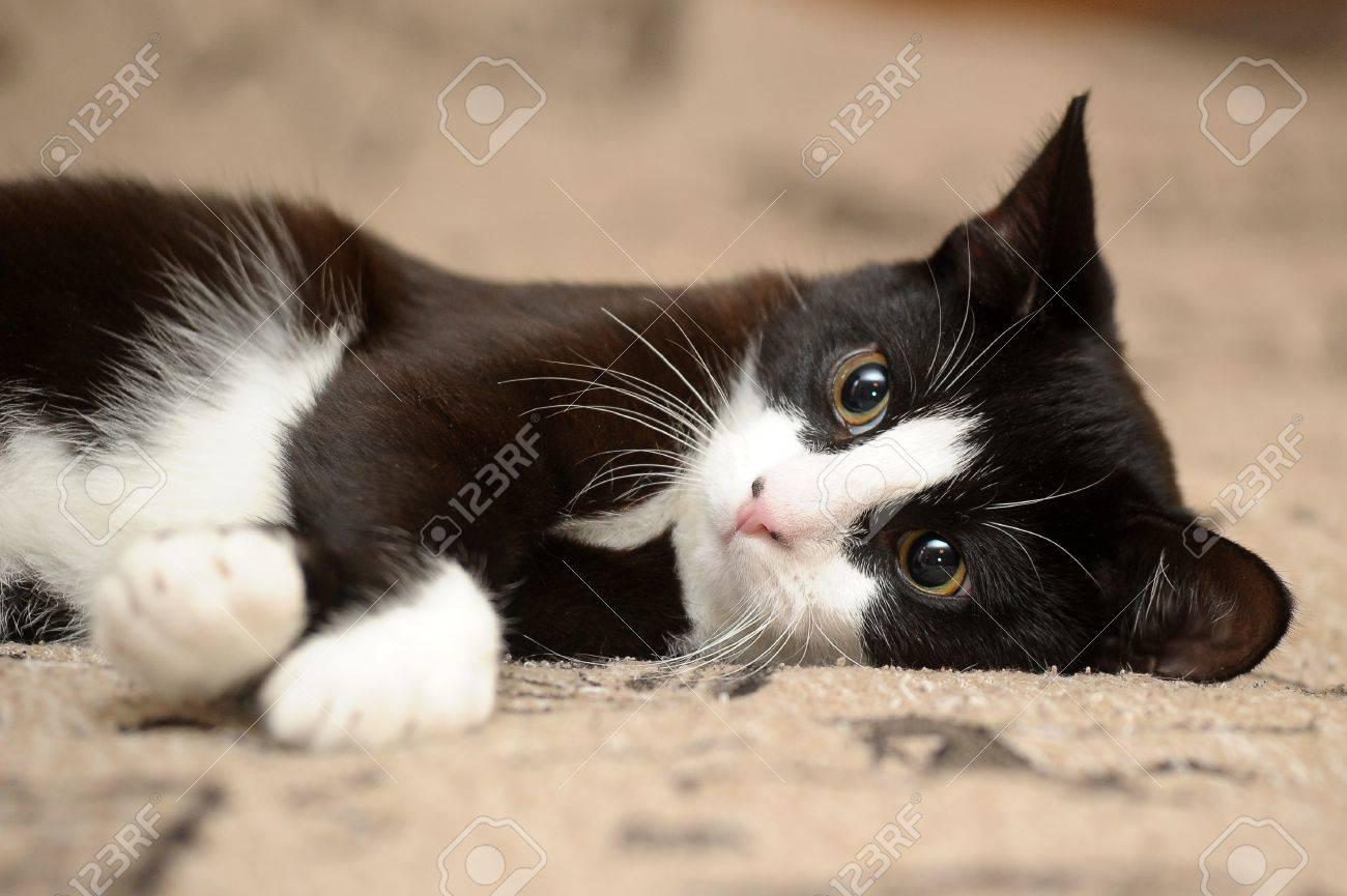 Gato Blanco Y Negro. Cheap Fotos De Gatos Blanco Y Negro. Beautiful ...
