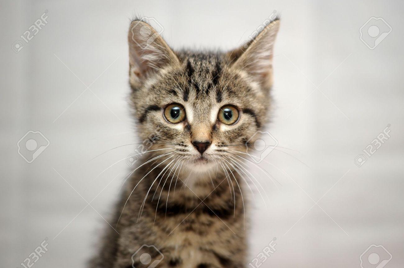 Kitten neutering effects