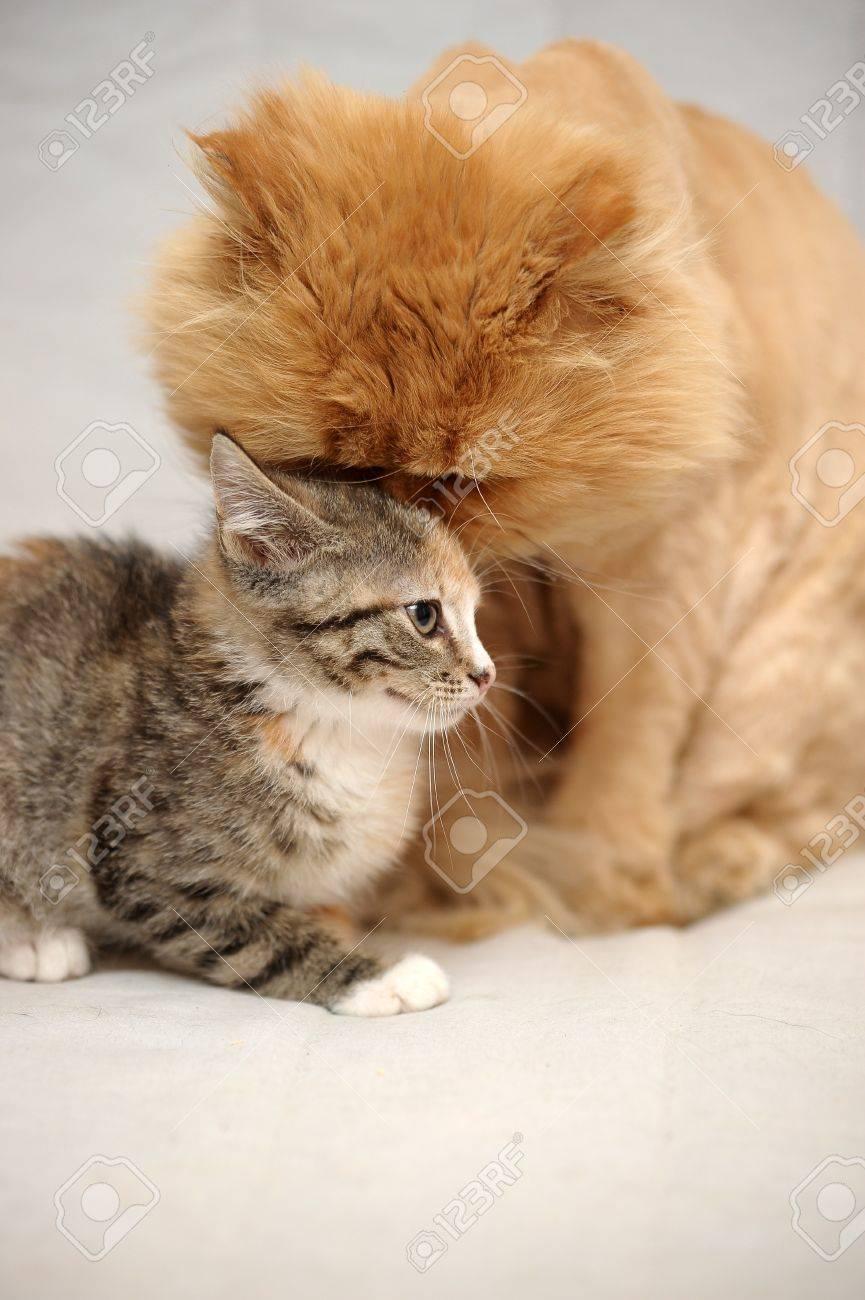 Cat And Kitten Stock Photo - 15399867