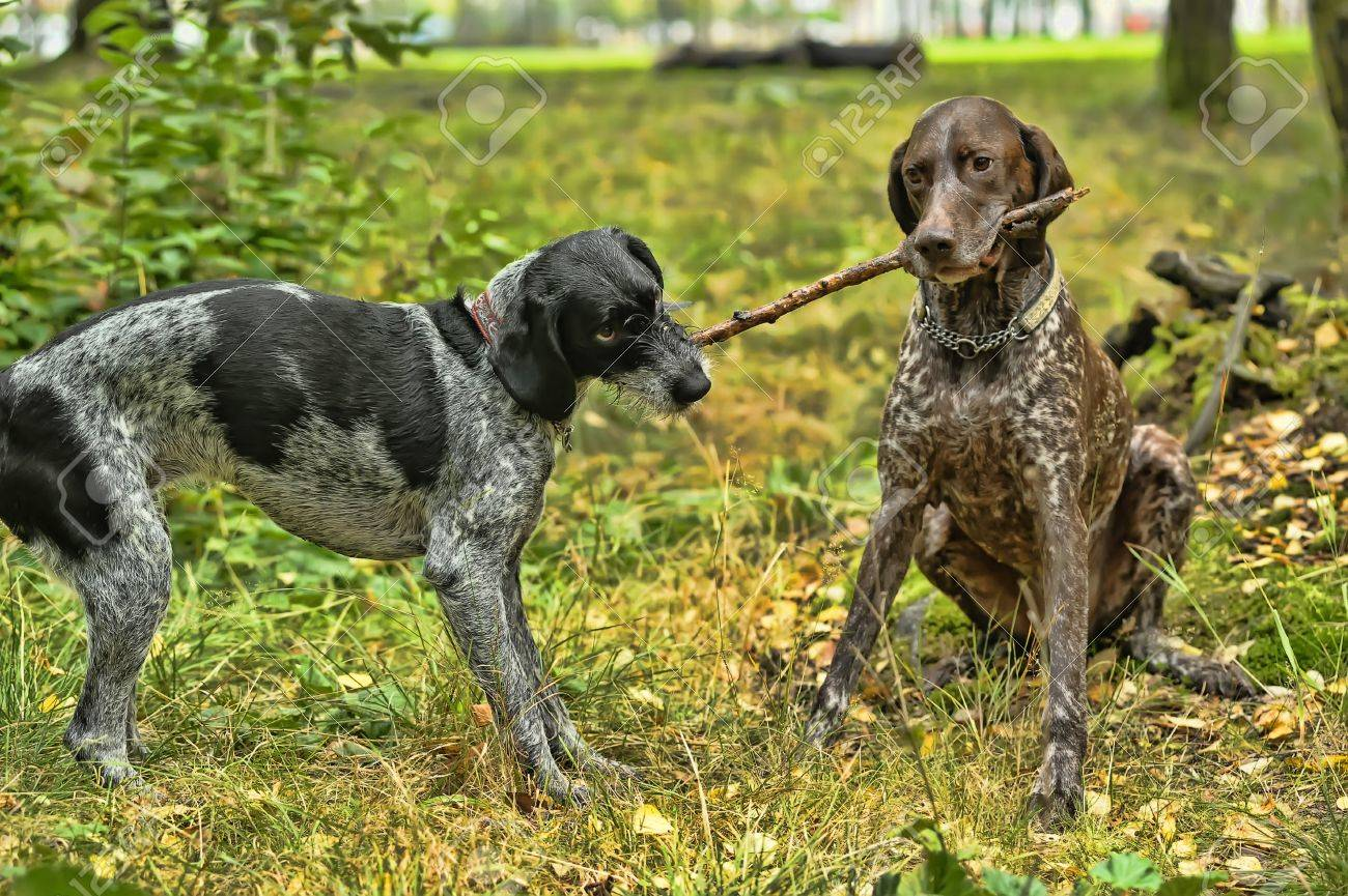 Two dogs Stock Photo - 15479257