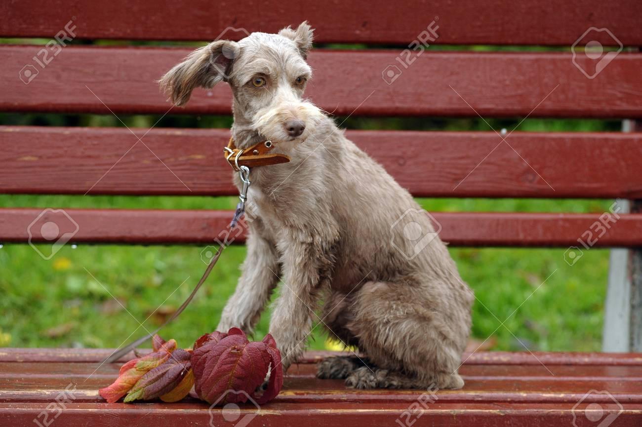 terrier Stock Photo - 15984137