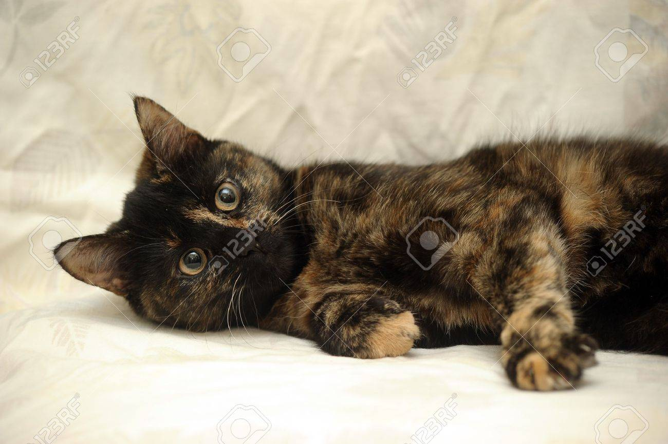 Image result for tortie