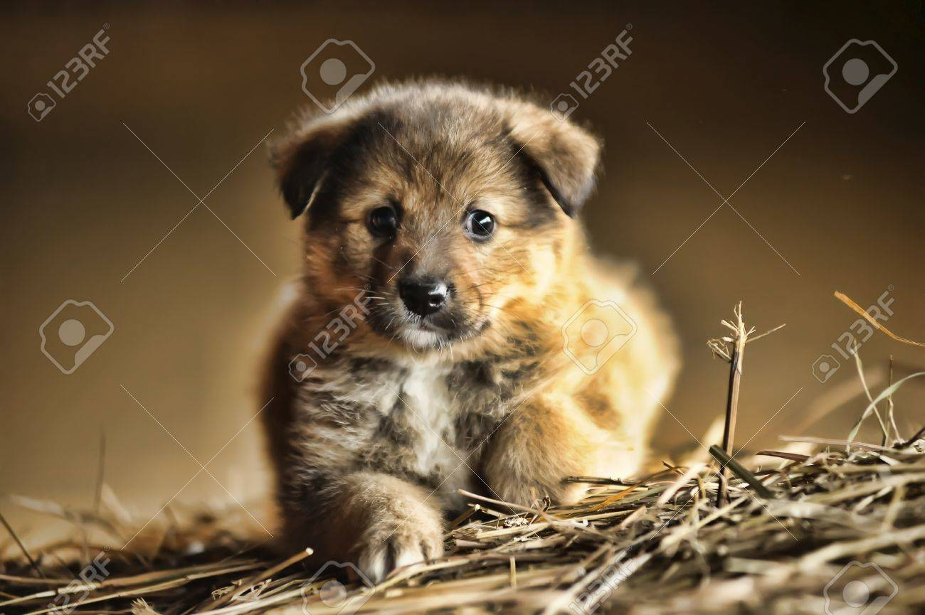 funny little brown puppy Stock Photo - 16034661